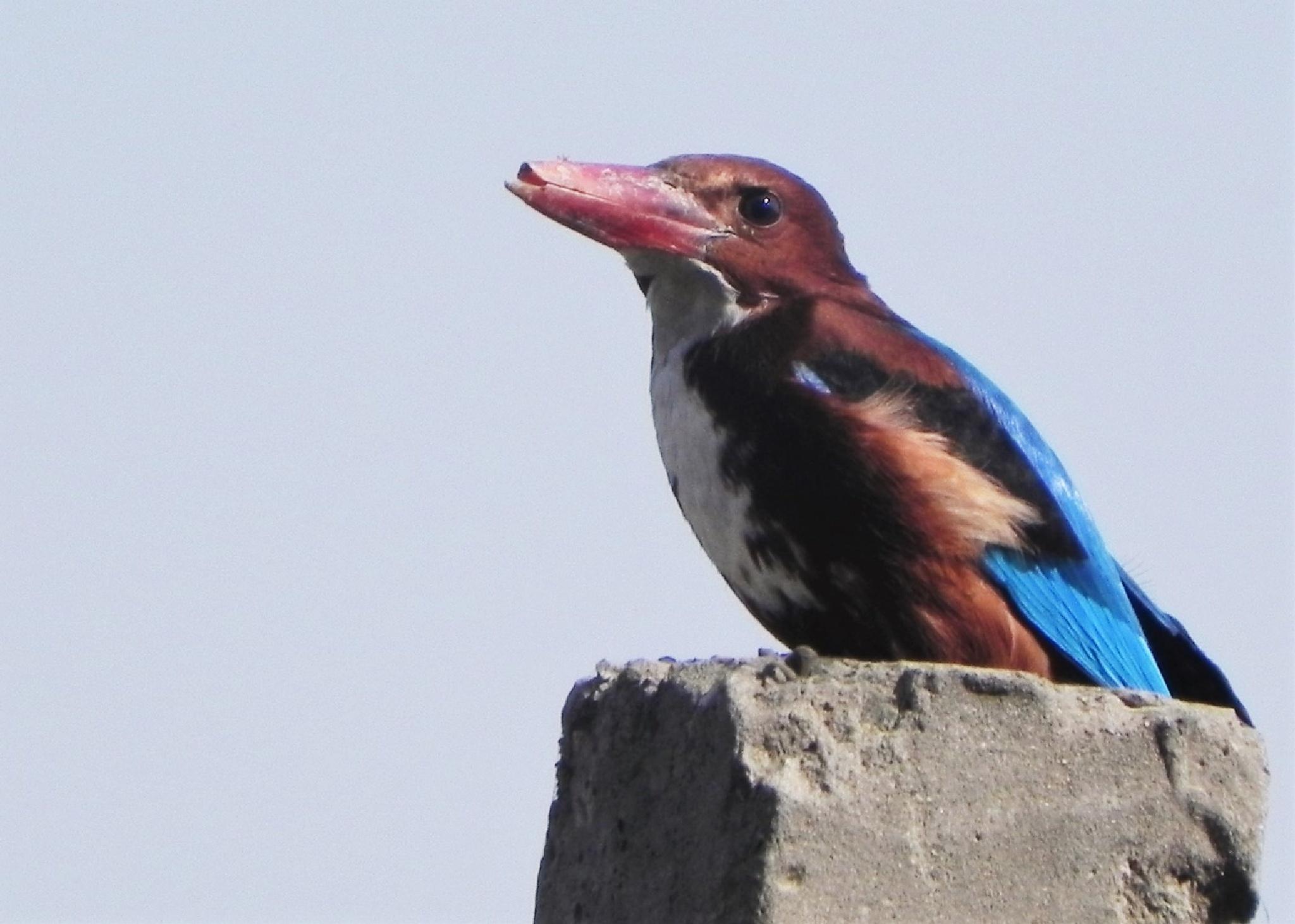 ~~~~~~  Brocken Beak........  ! by gajju.tyagi.1