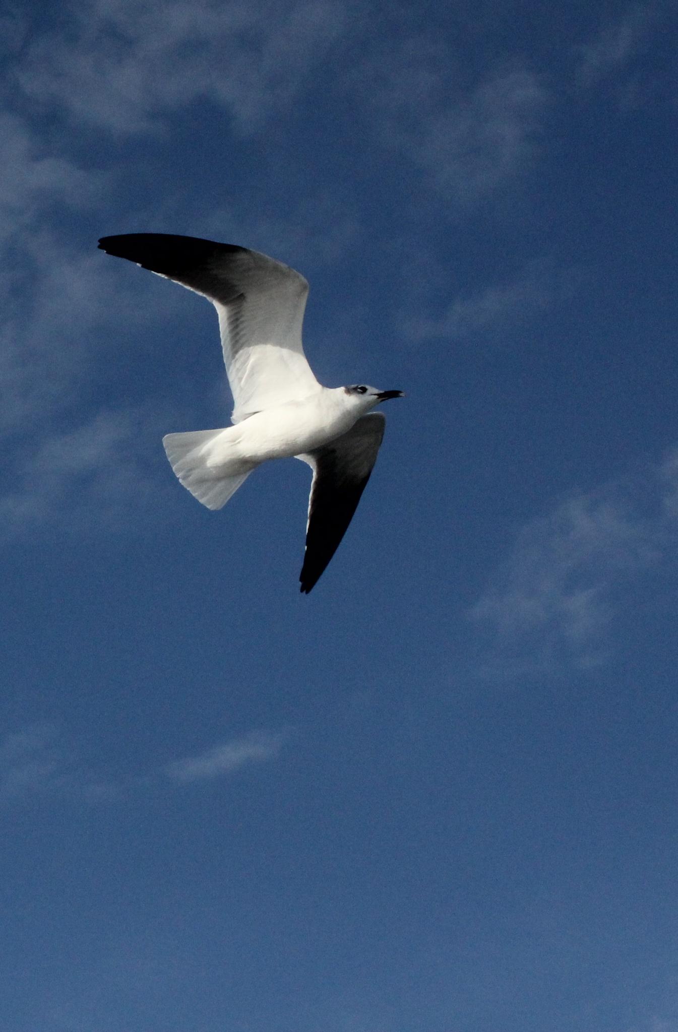 ~~~~~ Flying  higher.....! by gajju.tyagi.1