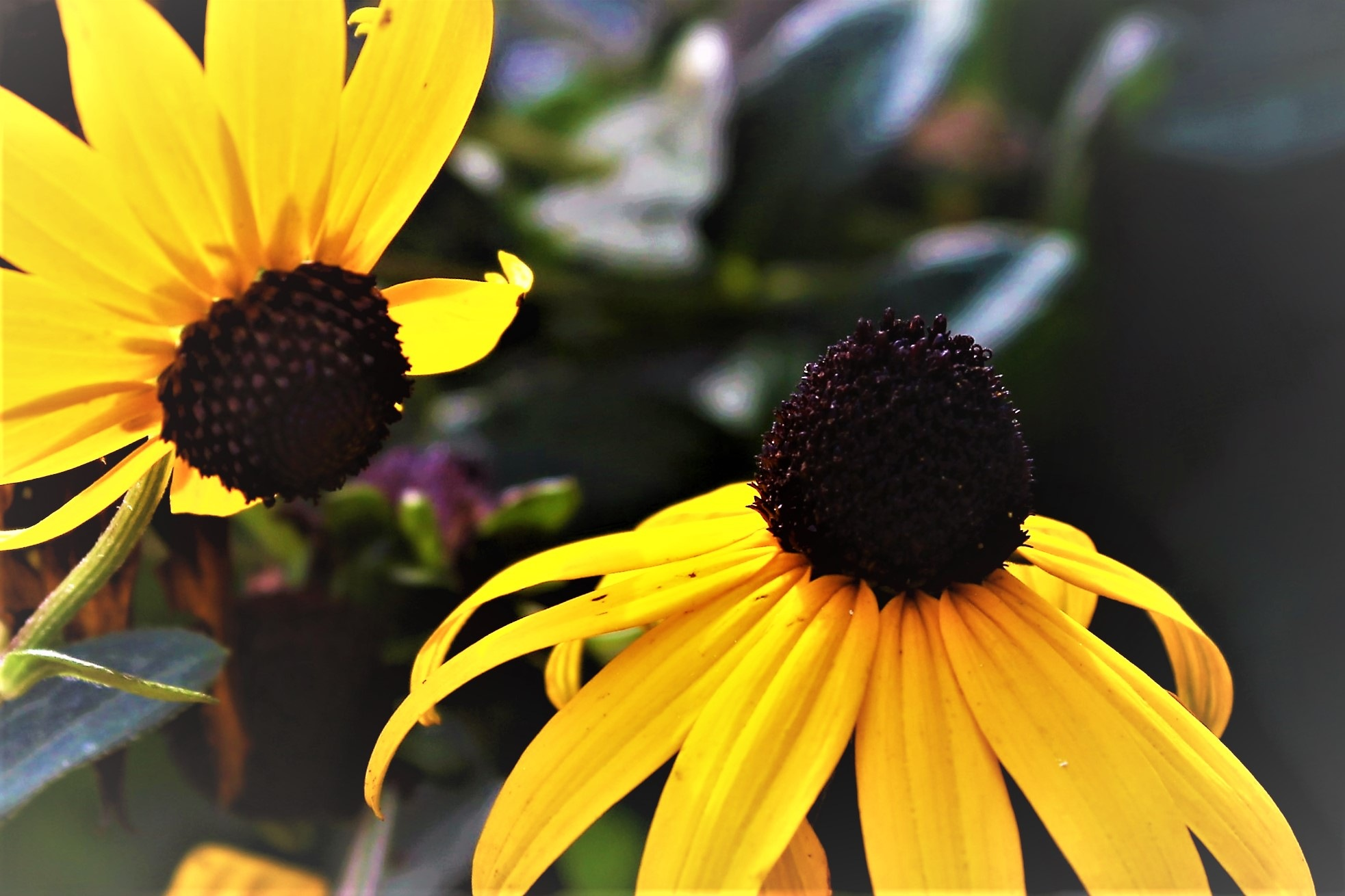 ~~~~~~ Yellow flowers,.......!! by gajju.tyagi.1