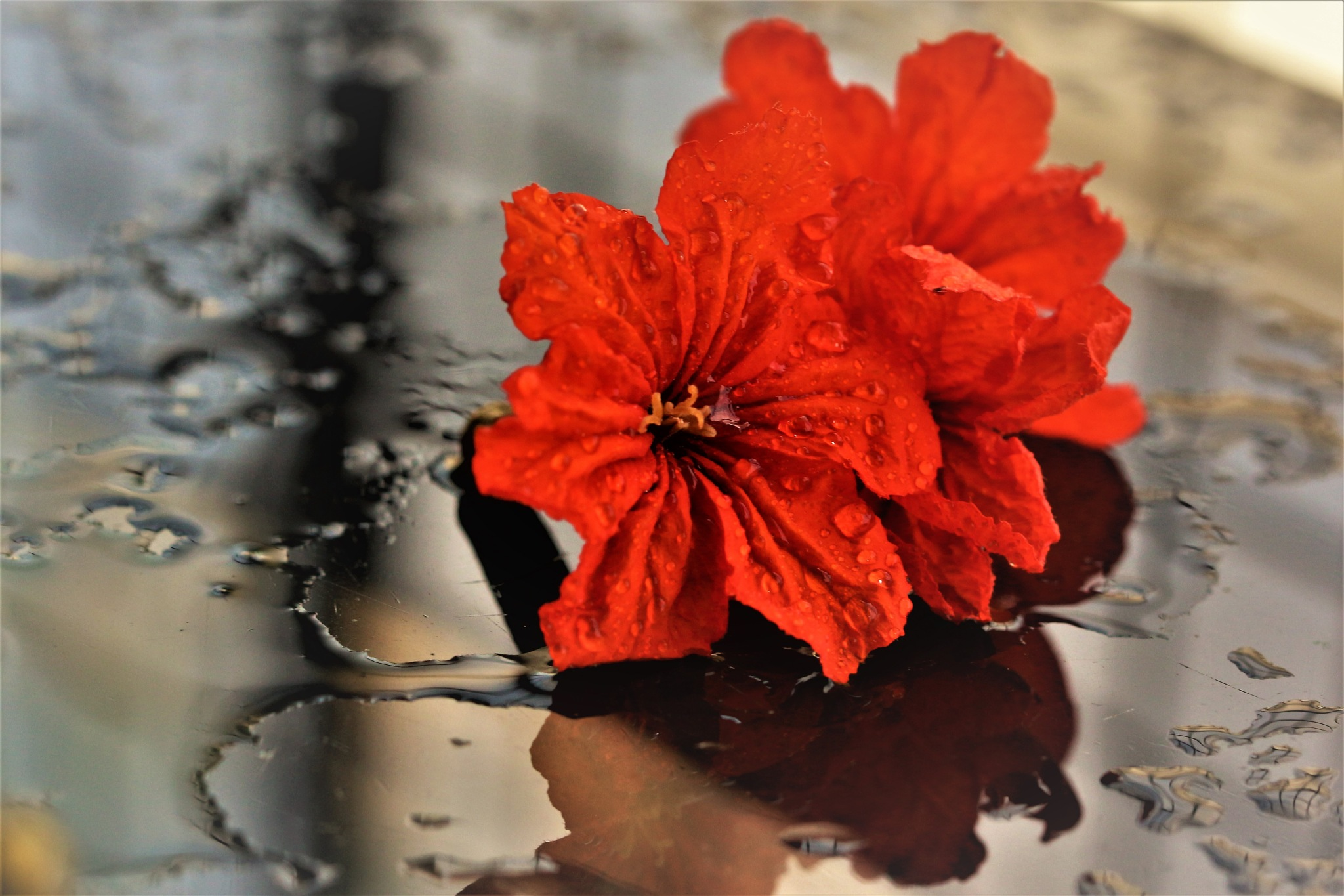 ~~~~~Flowers  after the rains,......!! by gajju.tyagi.1