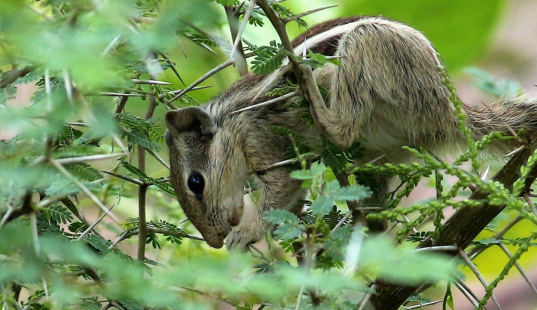 ~~~~~Hiding from the Hawk,...........!!! by gajju.tyagi.1