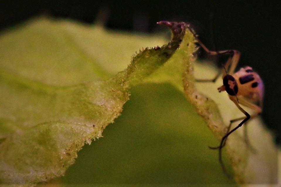 ~~~~~ Tiniest Bug,........!! by gajju.tyagi.1