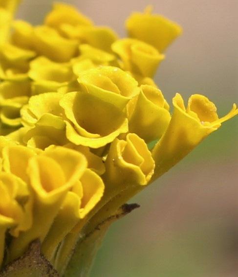 ~~~~~Yellow flower,..........! by gajju.tyagi.1