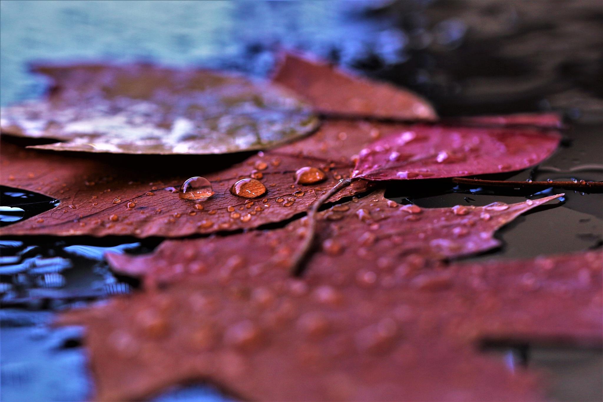 ~~~~~Colorful Fall,.....!! by gajju.tyagi.1