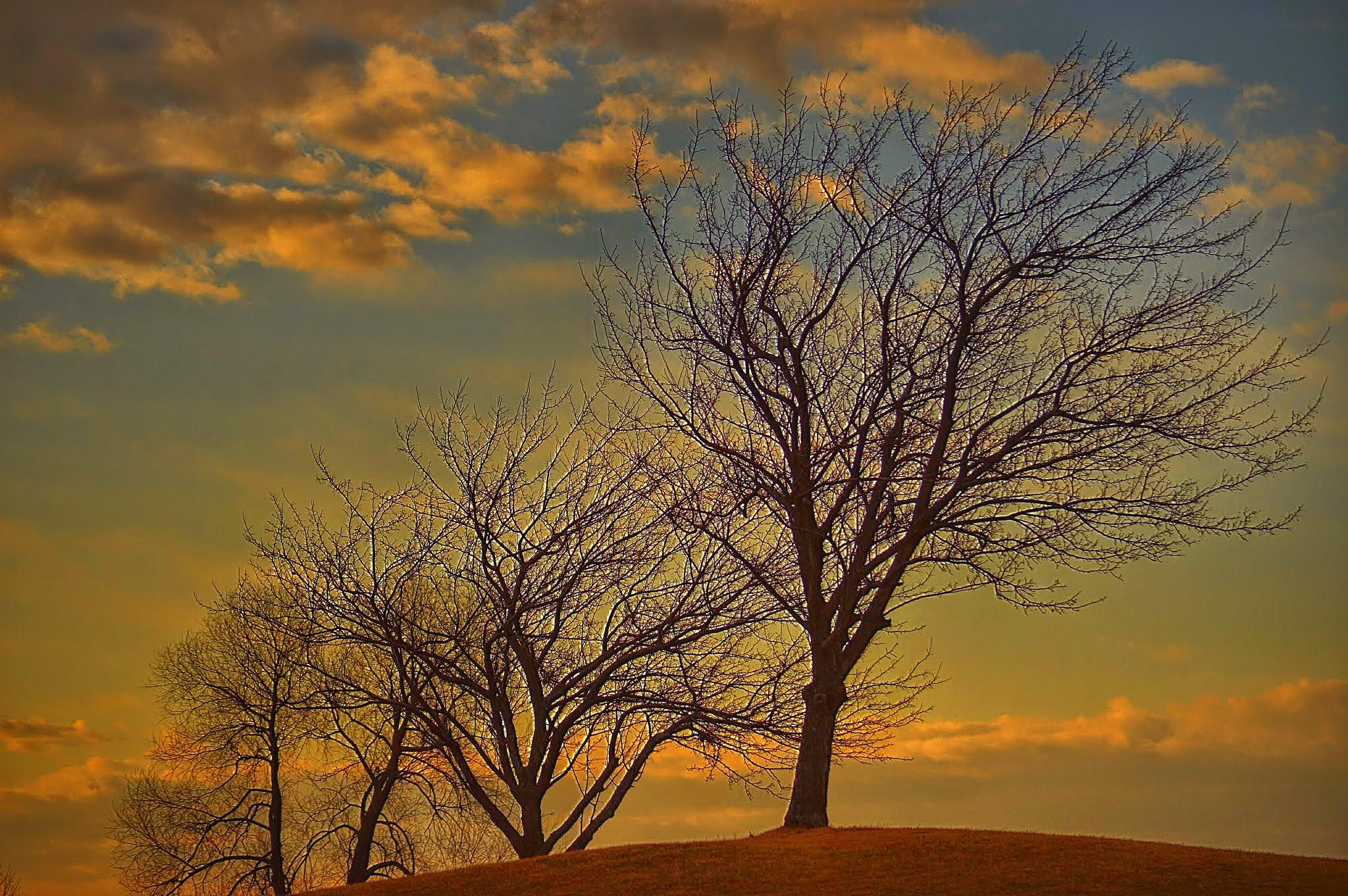 Afternoon trees by drcarlosesparza