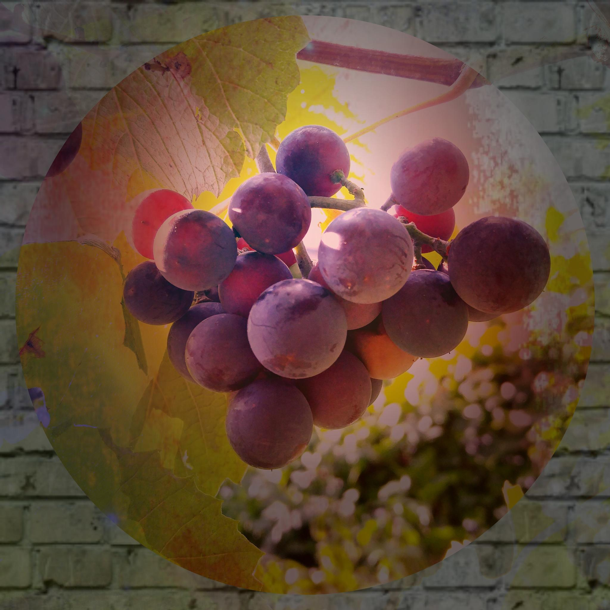 Grapes of Life by Life In A Big Rig