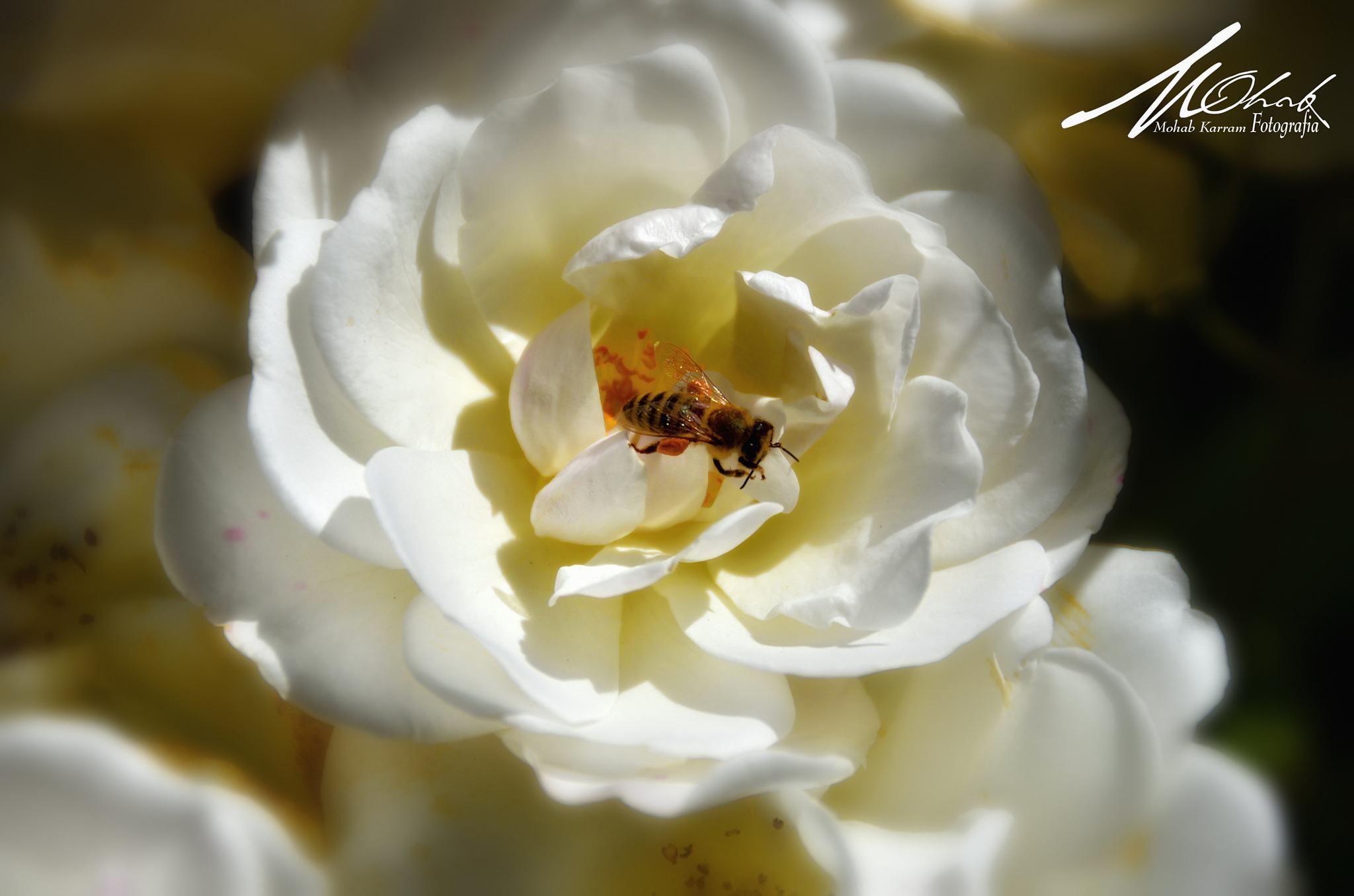 The Honey Maker by mohab.karram