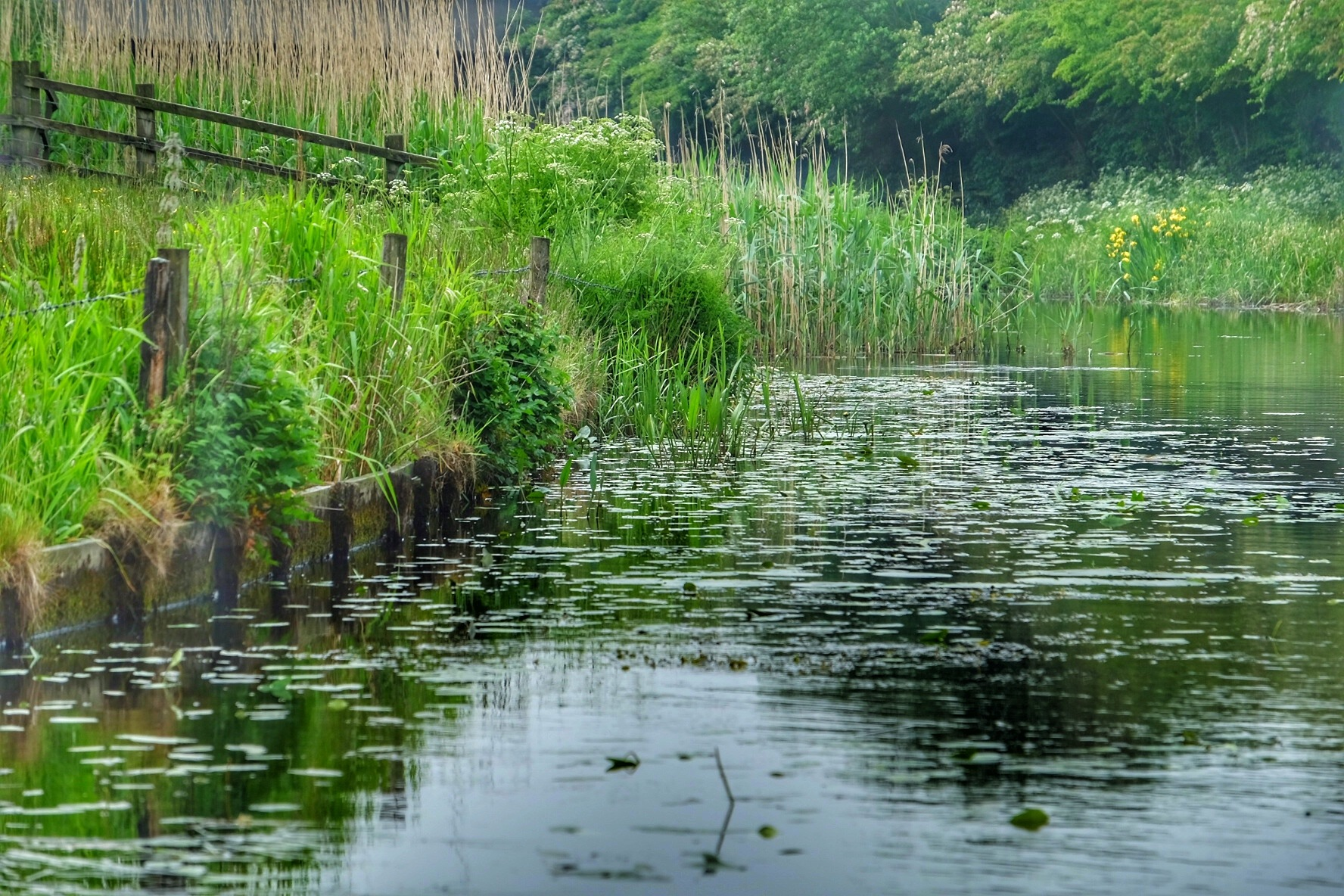 Lancaster Canal ...0806013 by Michael jjg