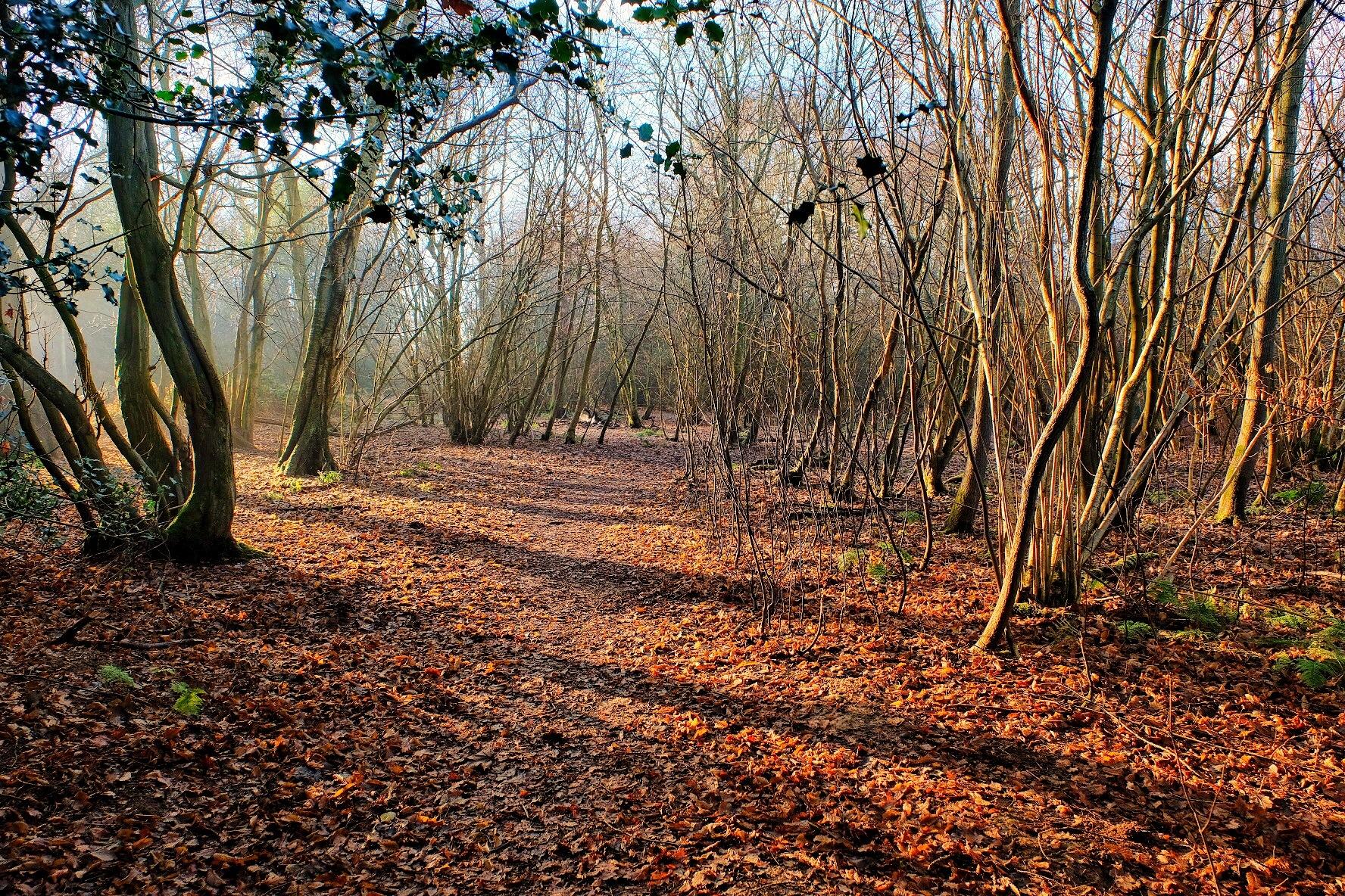 Sunshine Woods... by Michael jjg