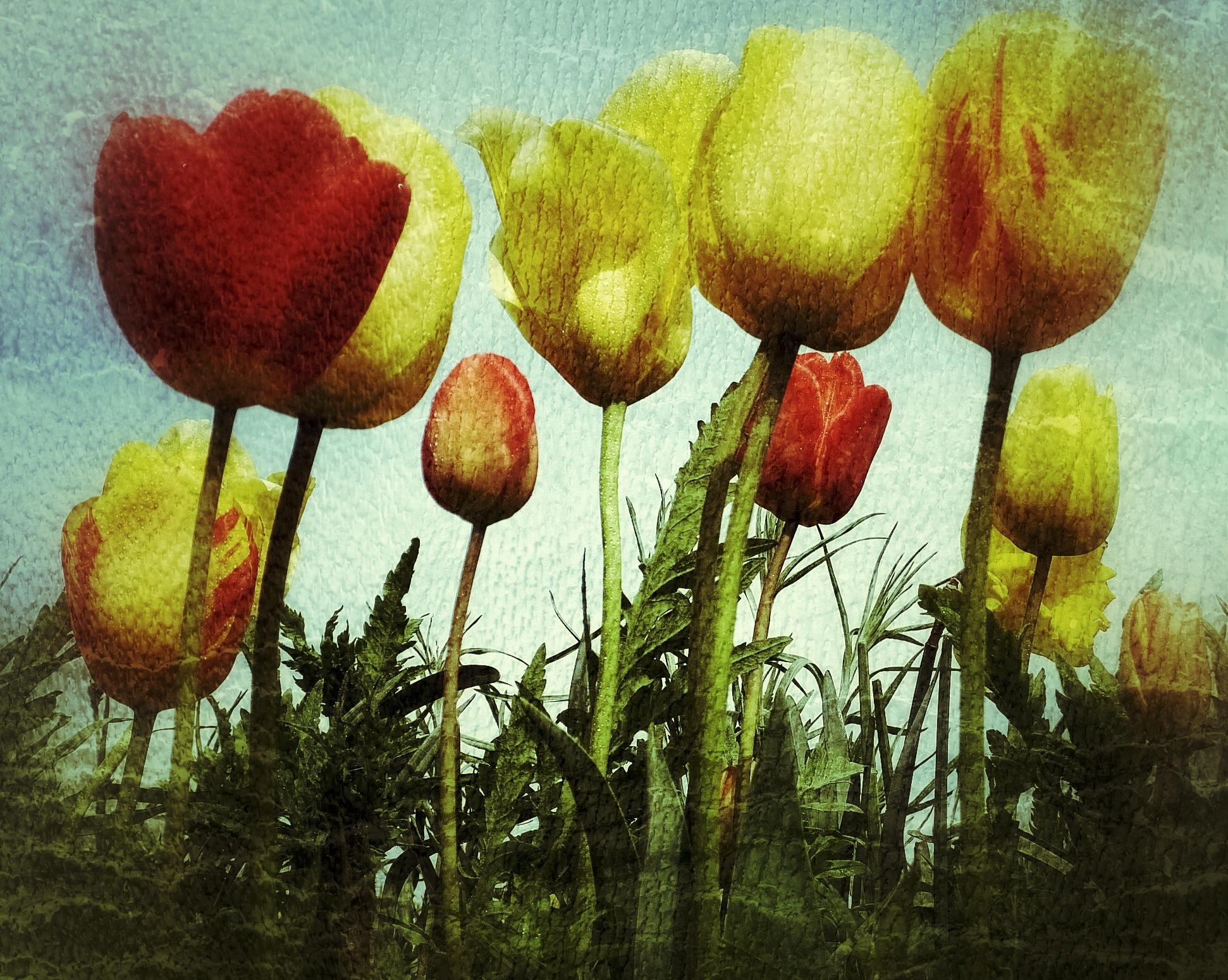 Image Flower...i23062100 by Michael jjg