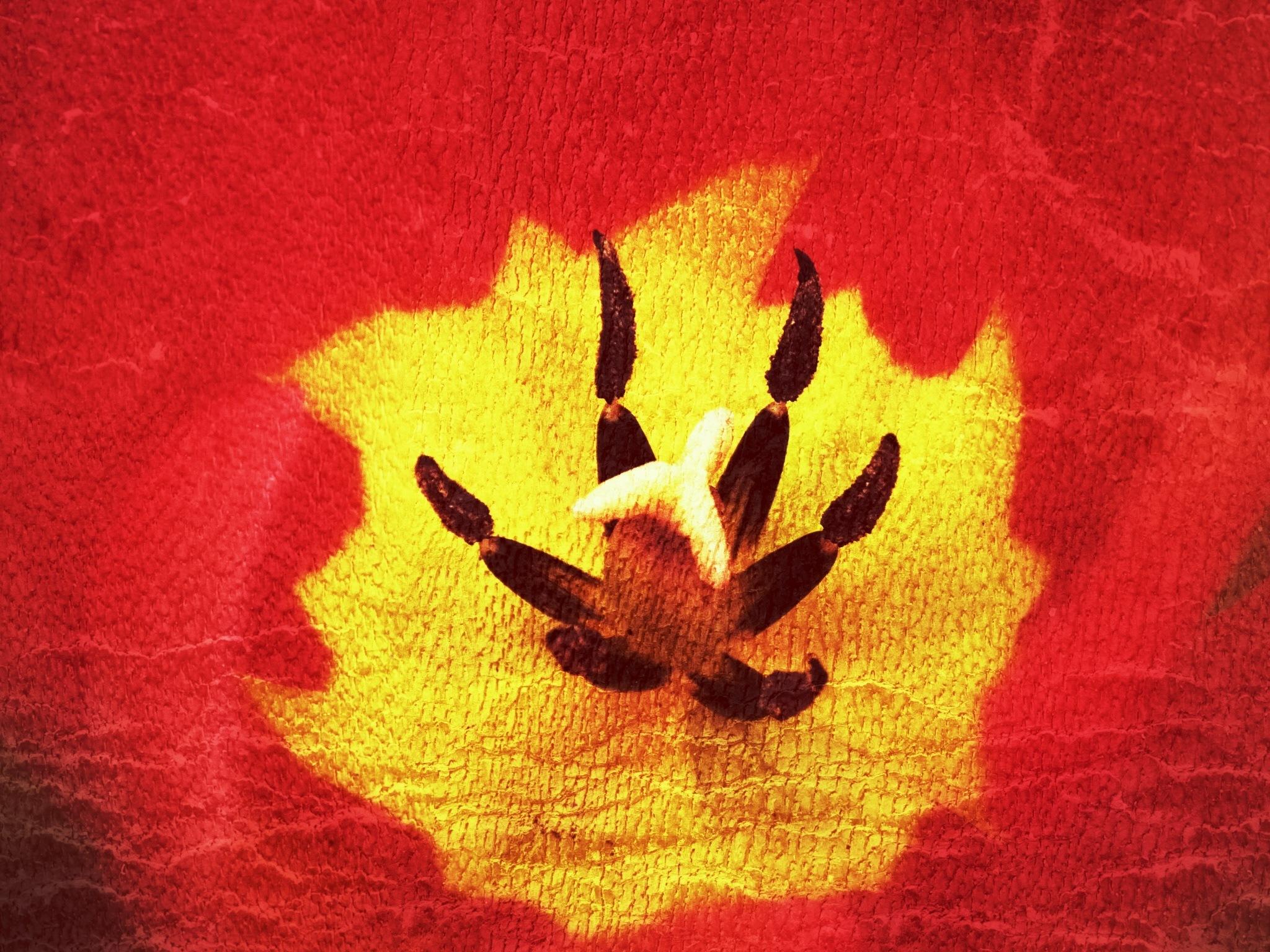 Image Flower...i23062120 by Michael jjg