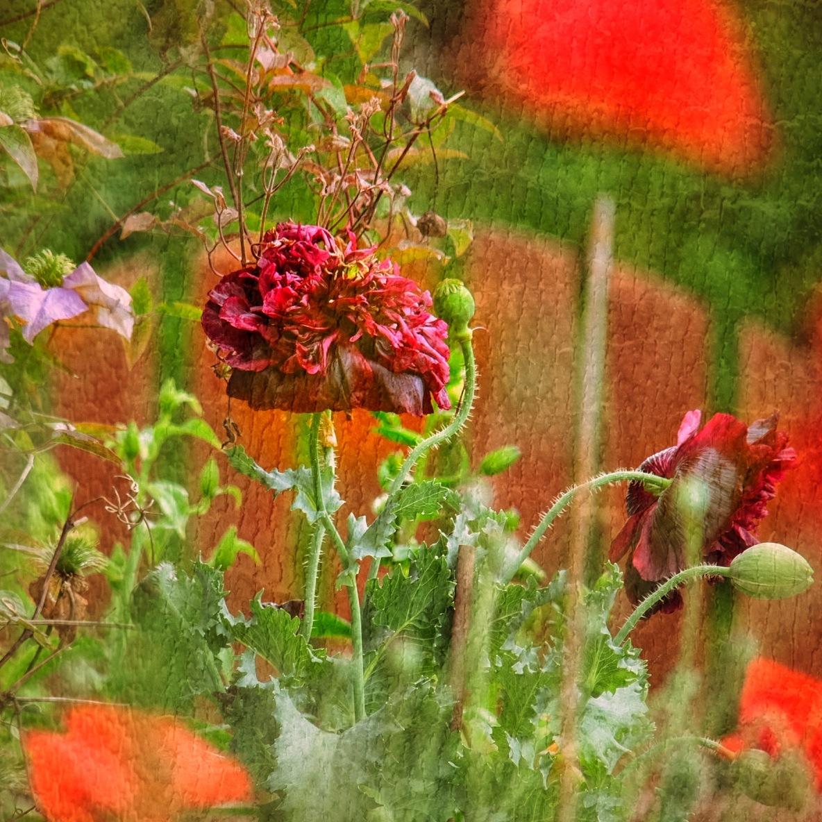 Image Flowers...i090601 by Michael jjg