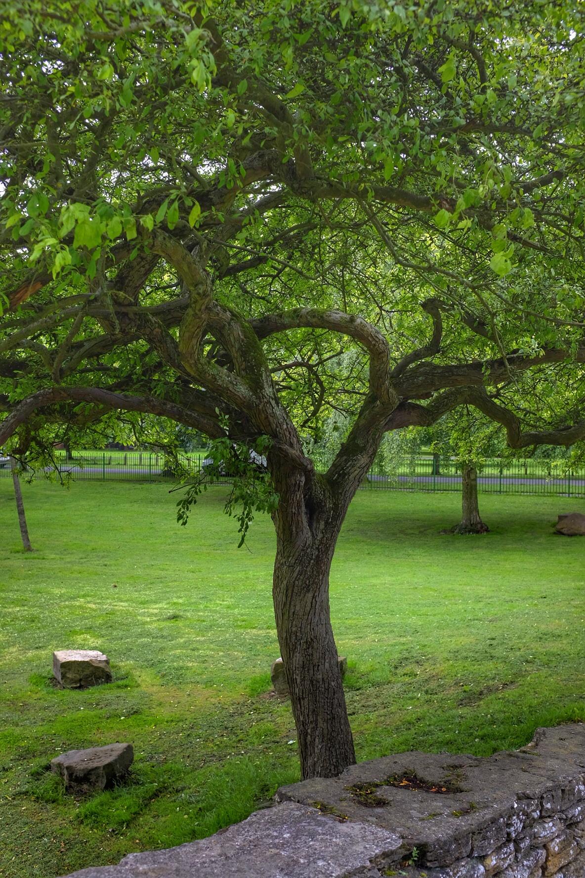 Tree by Michael jjg
