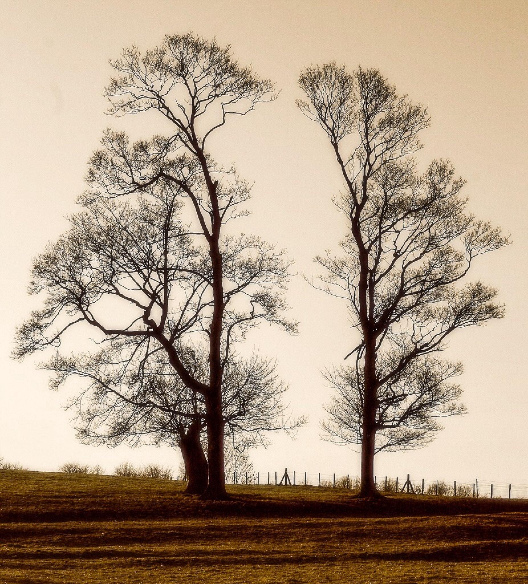 Trees on a Hill... by Michael jjg