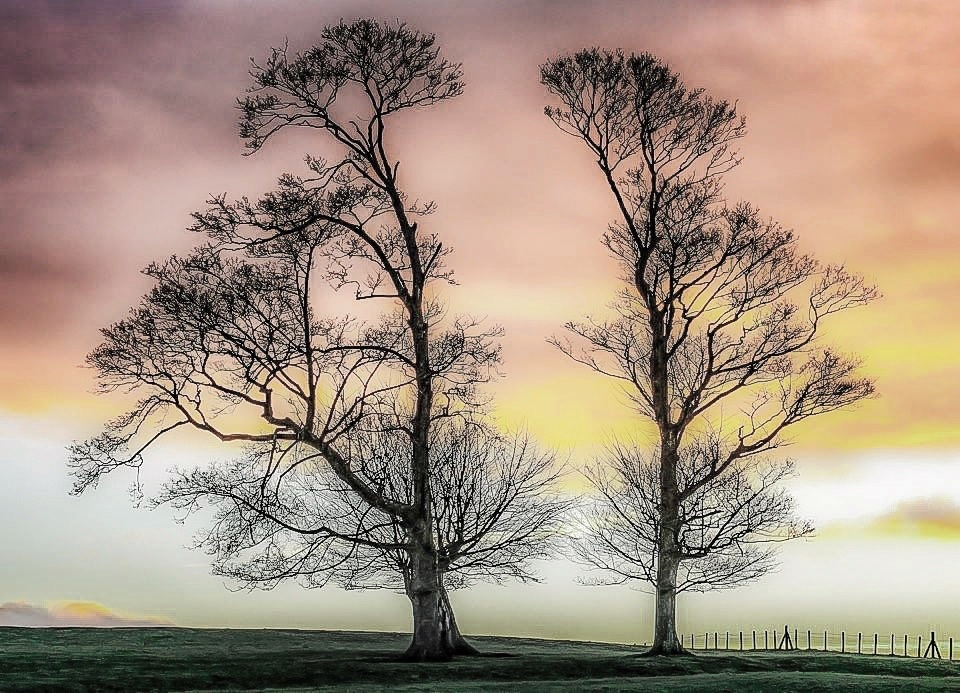 Two Trees in Harmony... by Michael jjg
