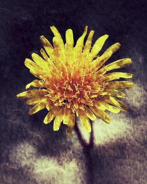 Image Flower...i24060603 by Michael jjg