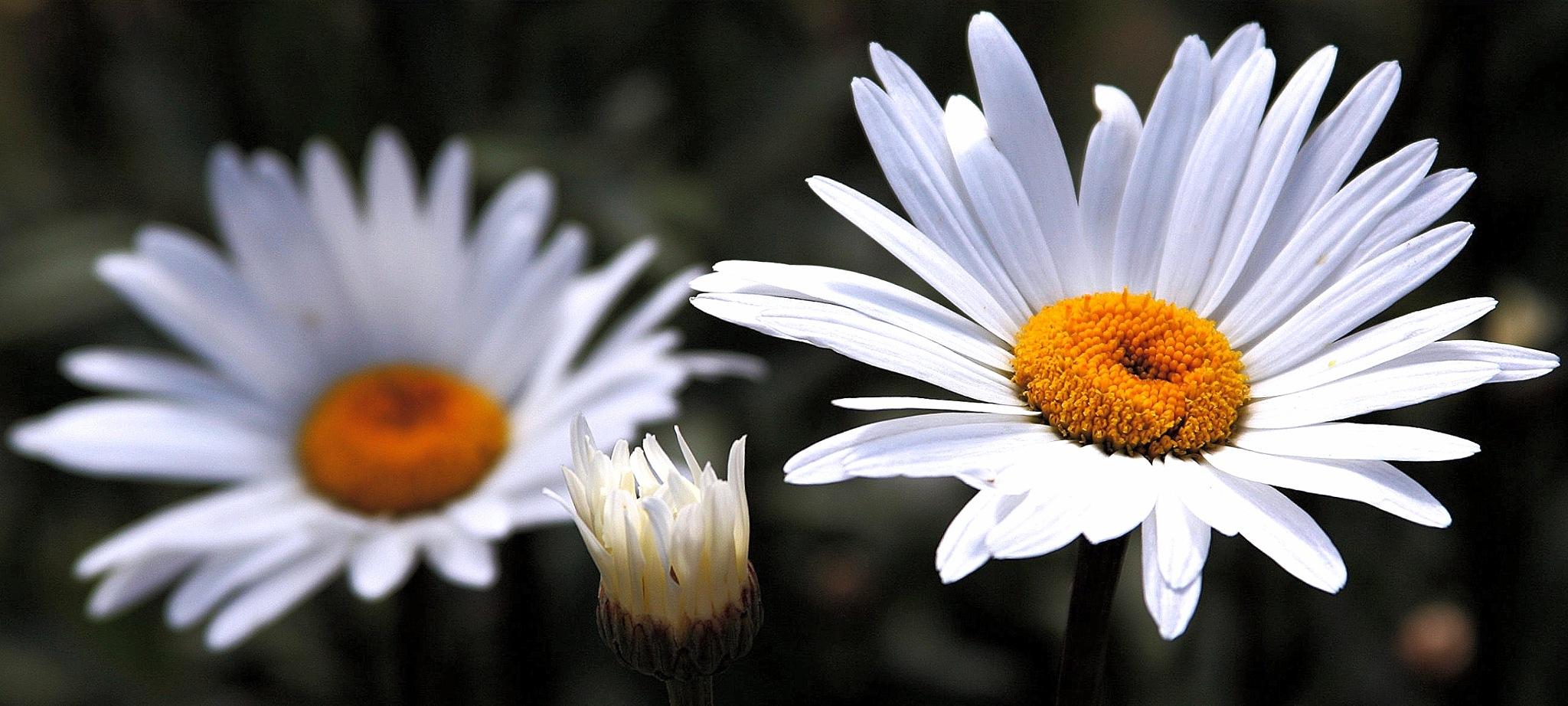 Flower...f23060556 by Michael jjg