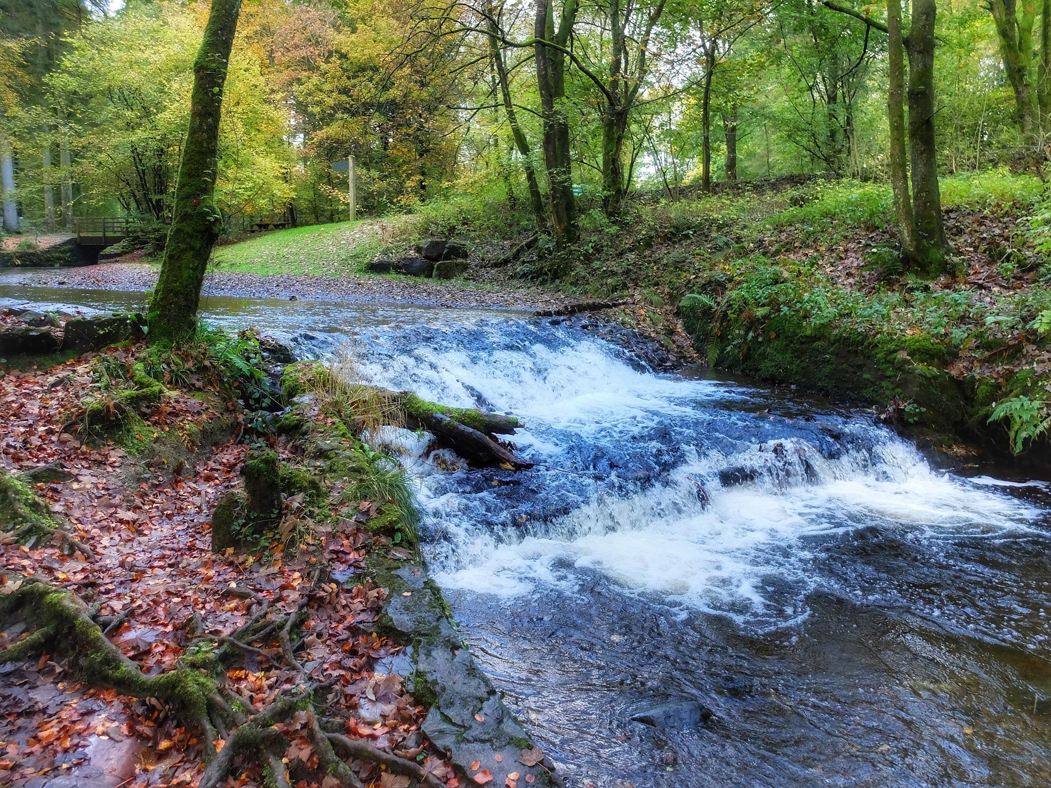 Autumn River... by Michael jjg