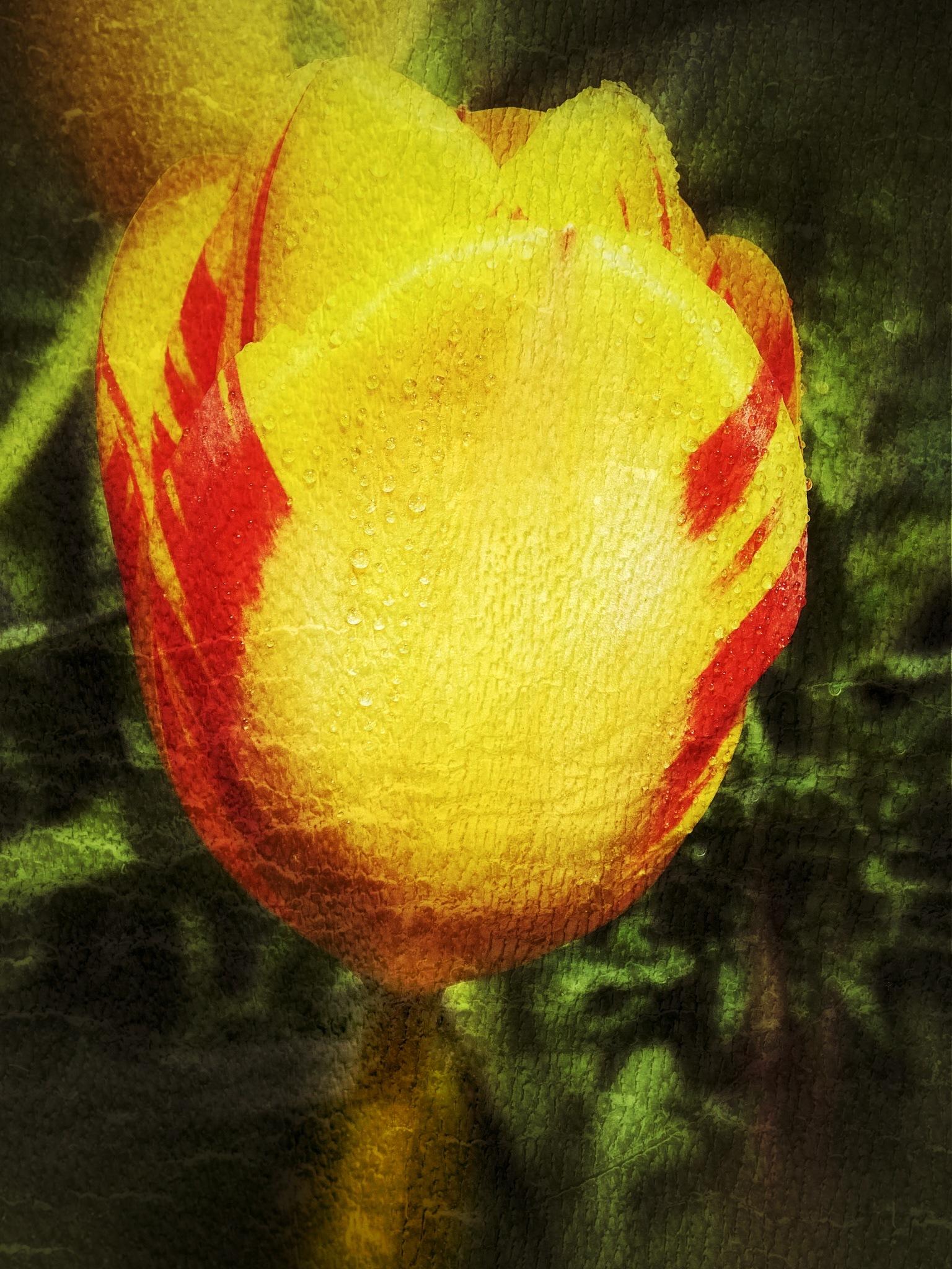 Image Flower...i23062110 by Michael jjg