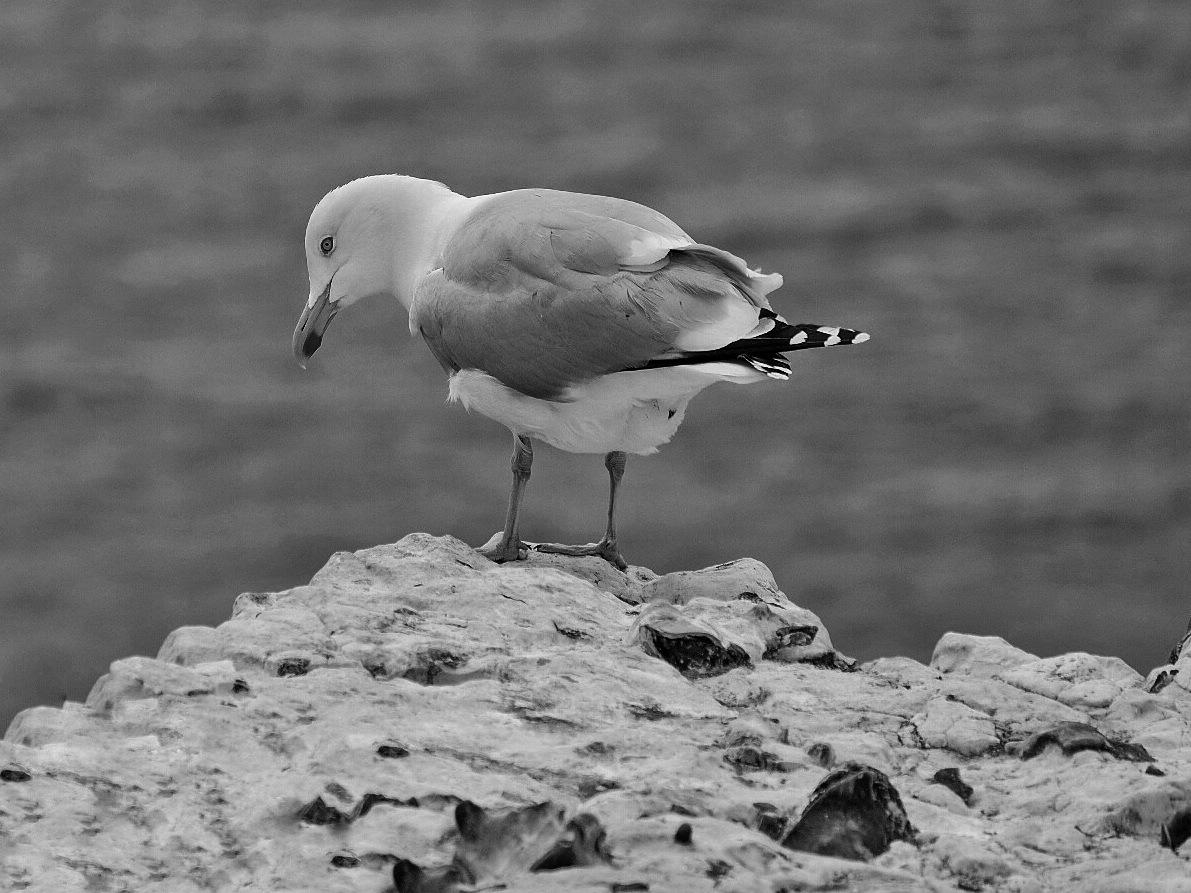 Gull B&W... by Michael jjg