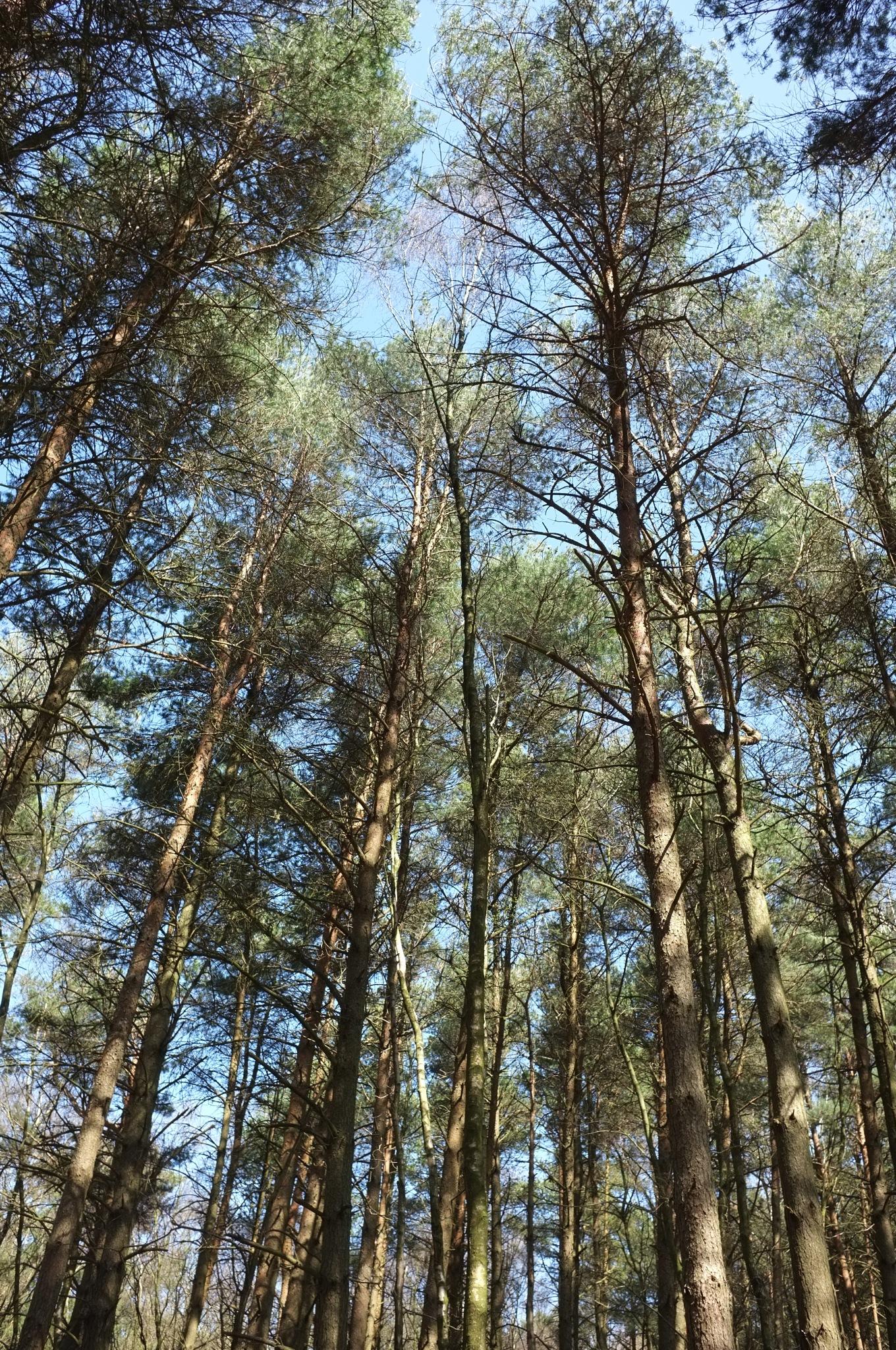Tree Tops...080601 by Michael jjg