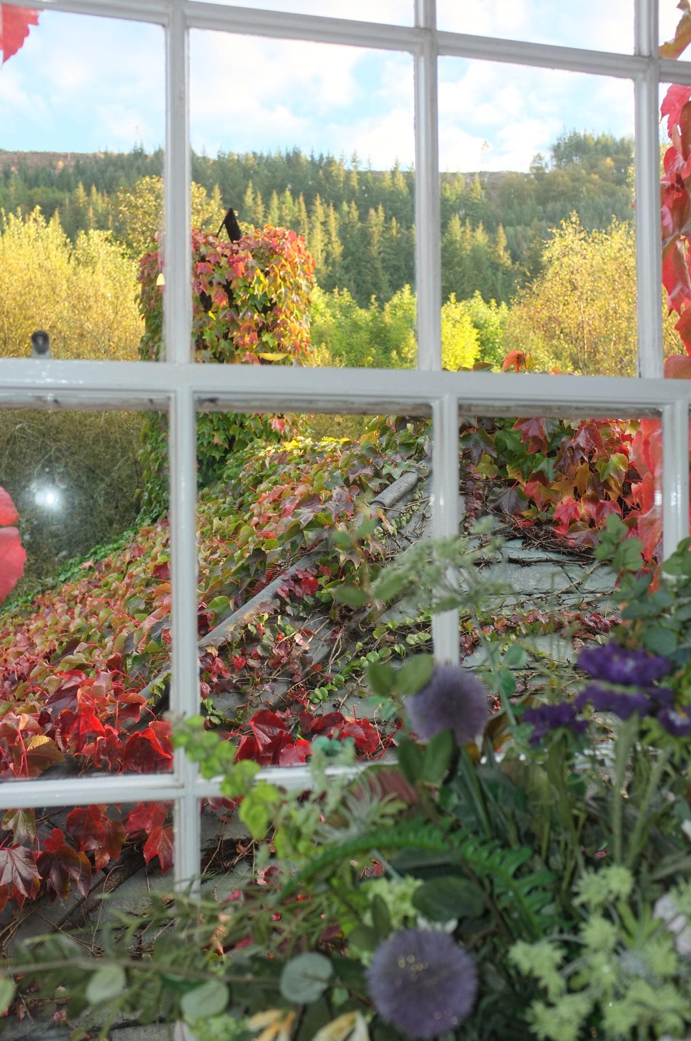 Through the Window...080601 by Michael jjg