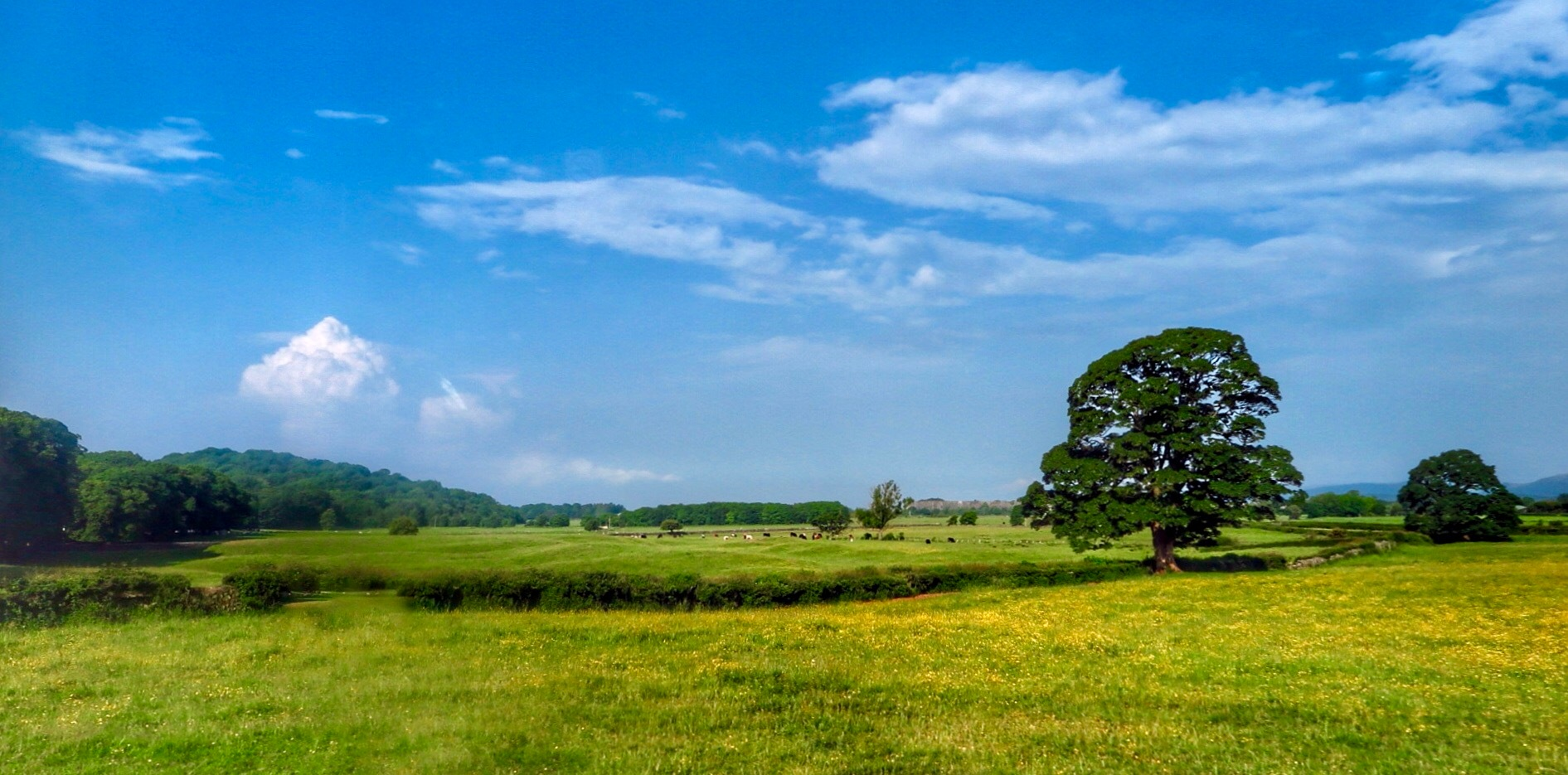 Blue, Green and Yellow...080601 by Michael jjg