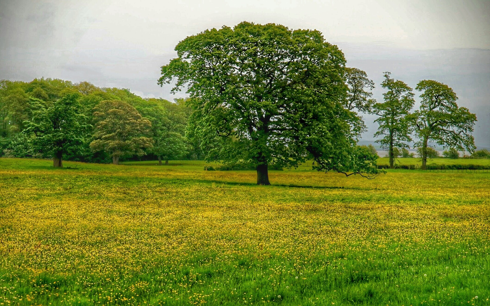 Green and Yellow...080601 by Michael jjg