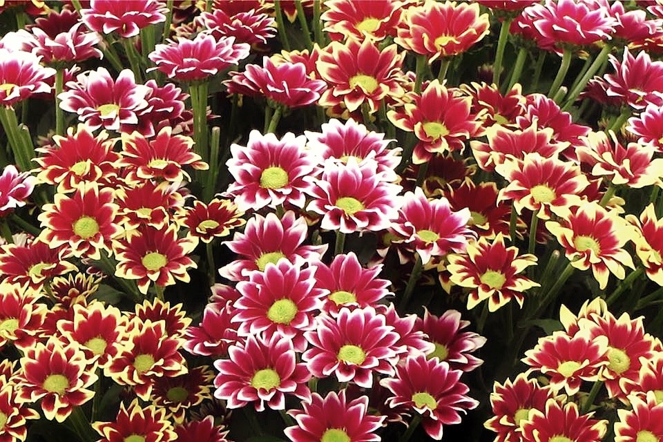 Flowers 129033... by Michael jjg