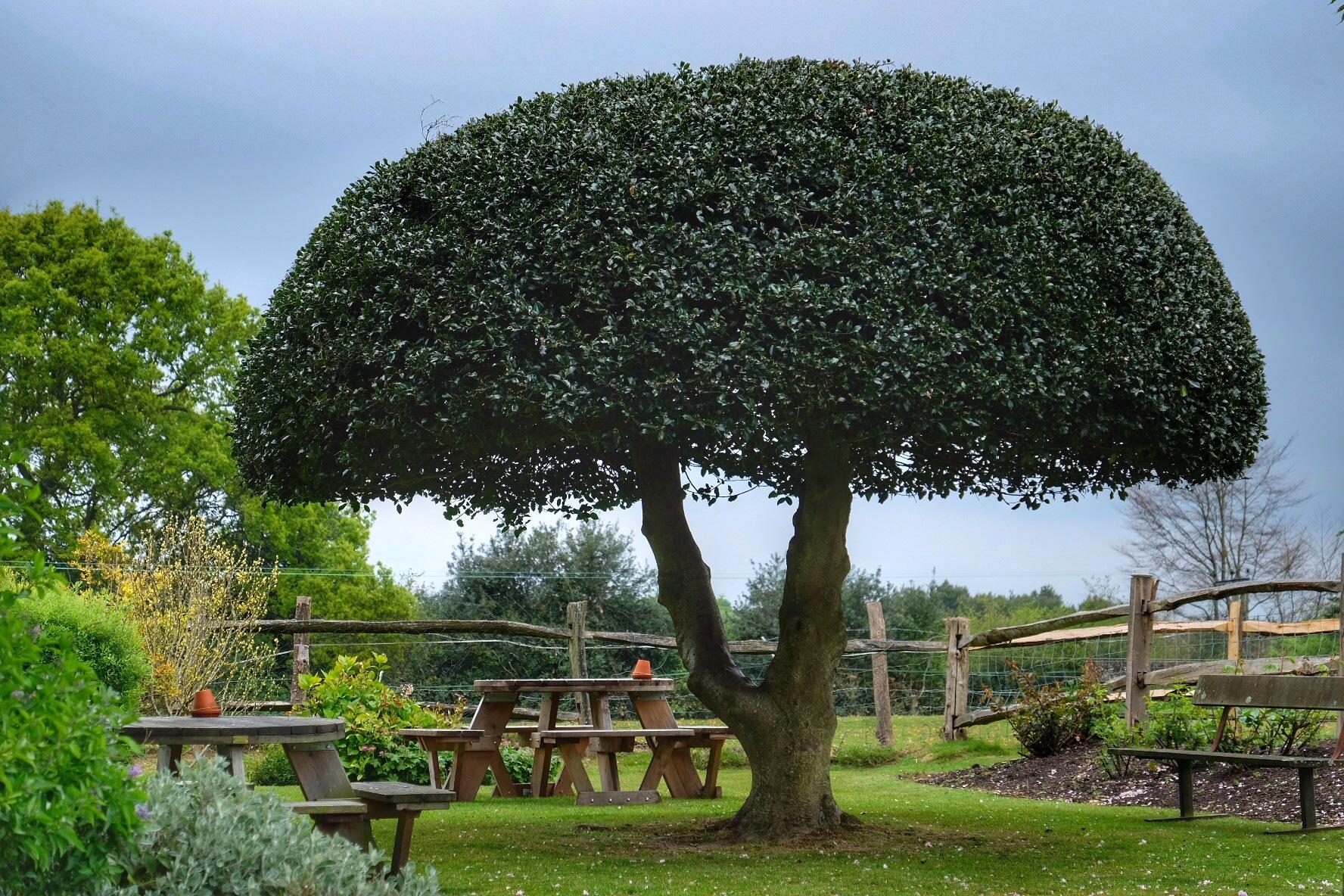 Shaped Tree... by Michael jjg