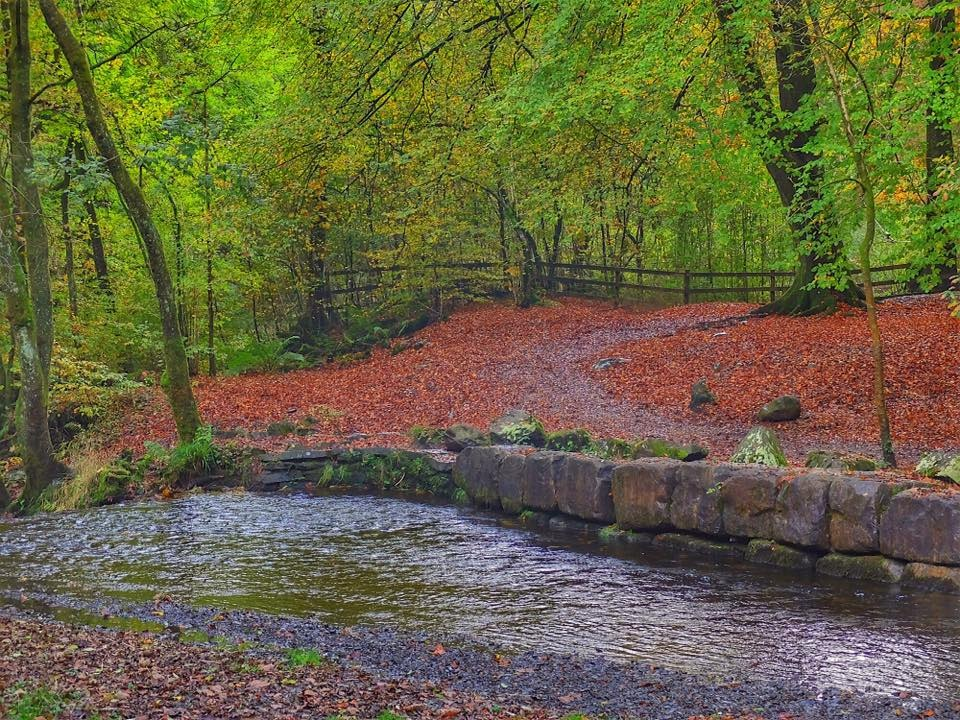 Forest Green and Brown... by Michael jjg