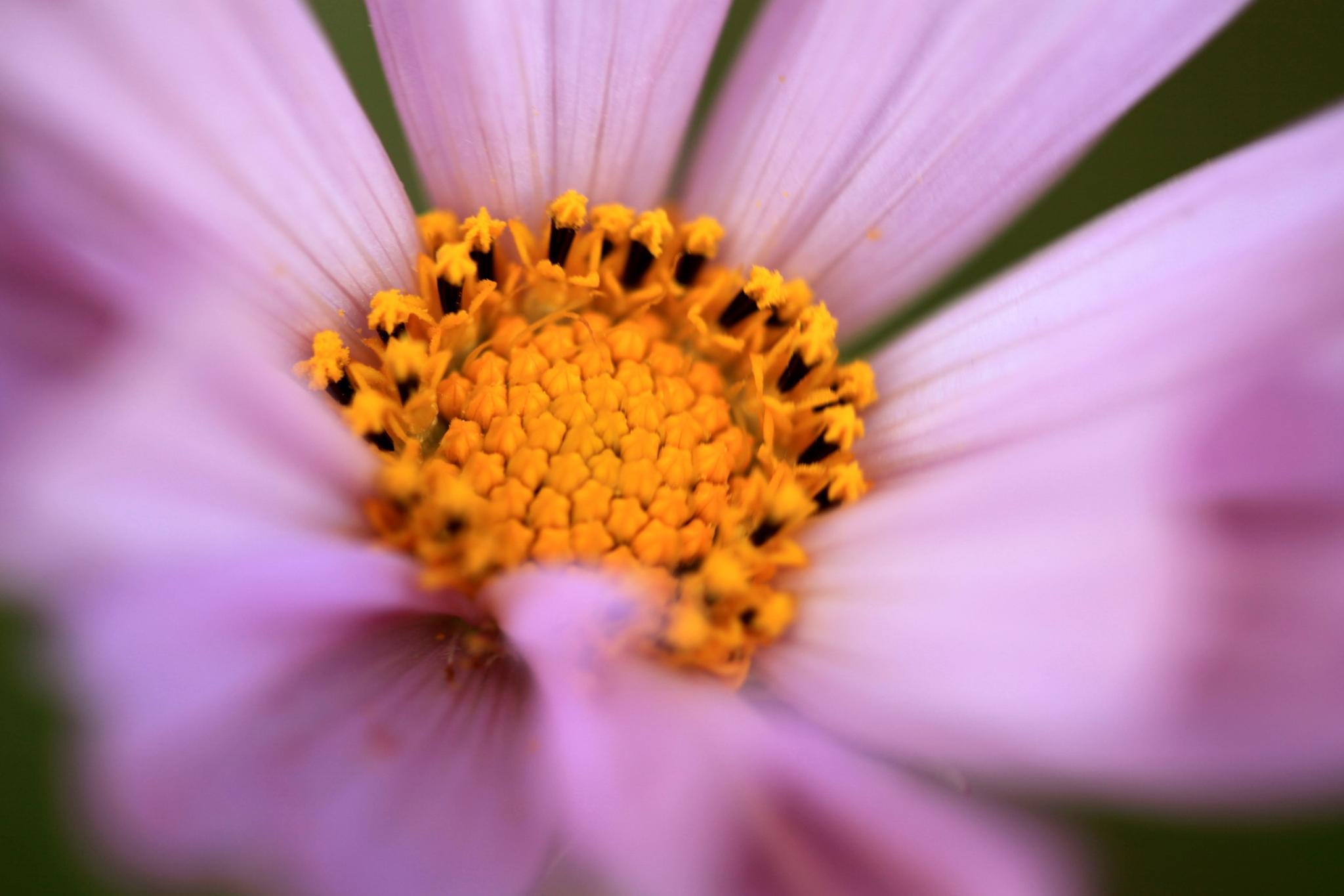 Purple Flower by 2003zhp