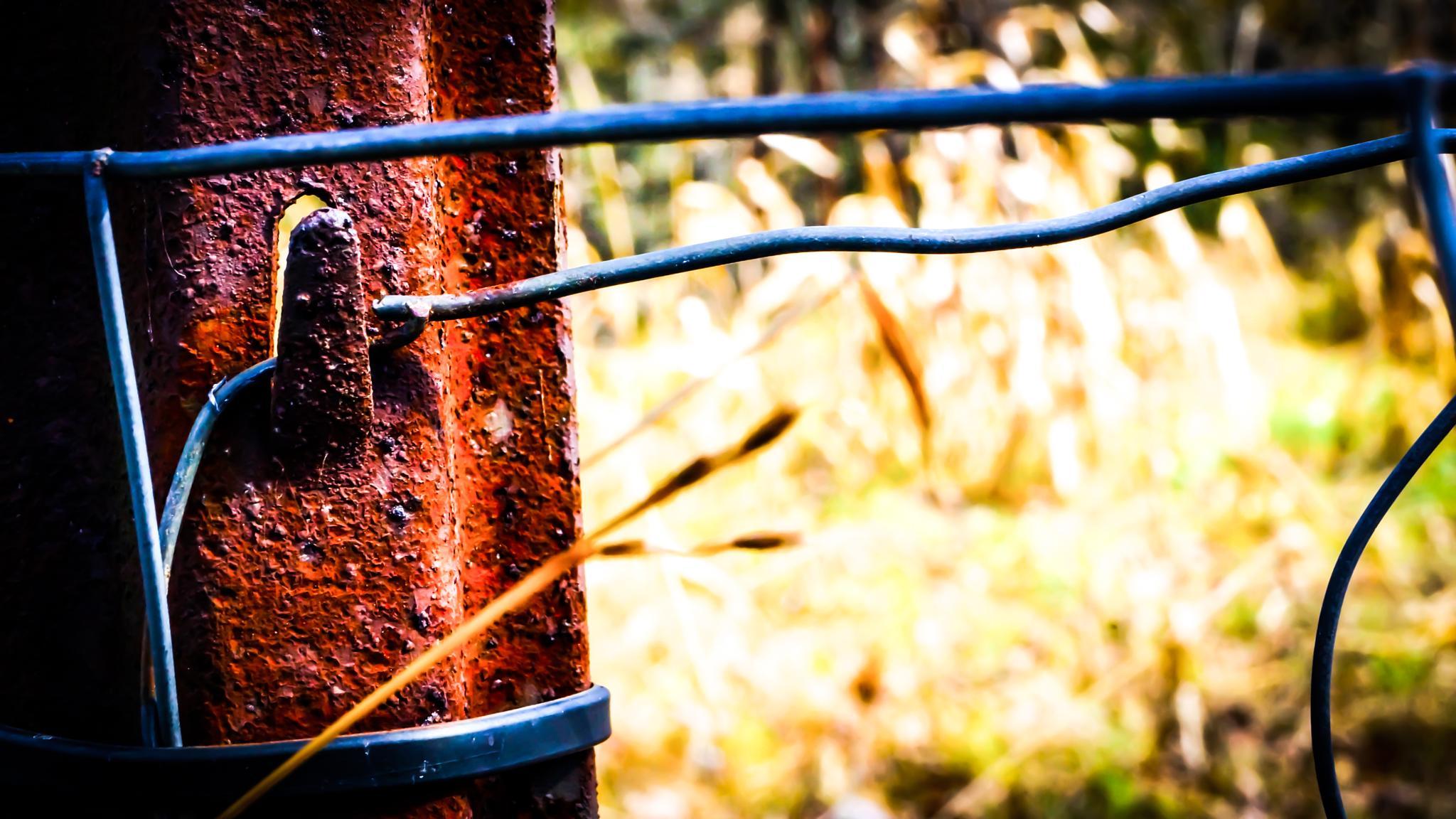 Rusty fence by douglas.hamilton.984