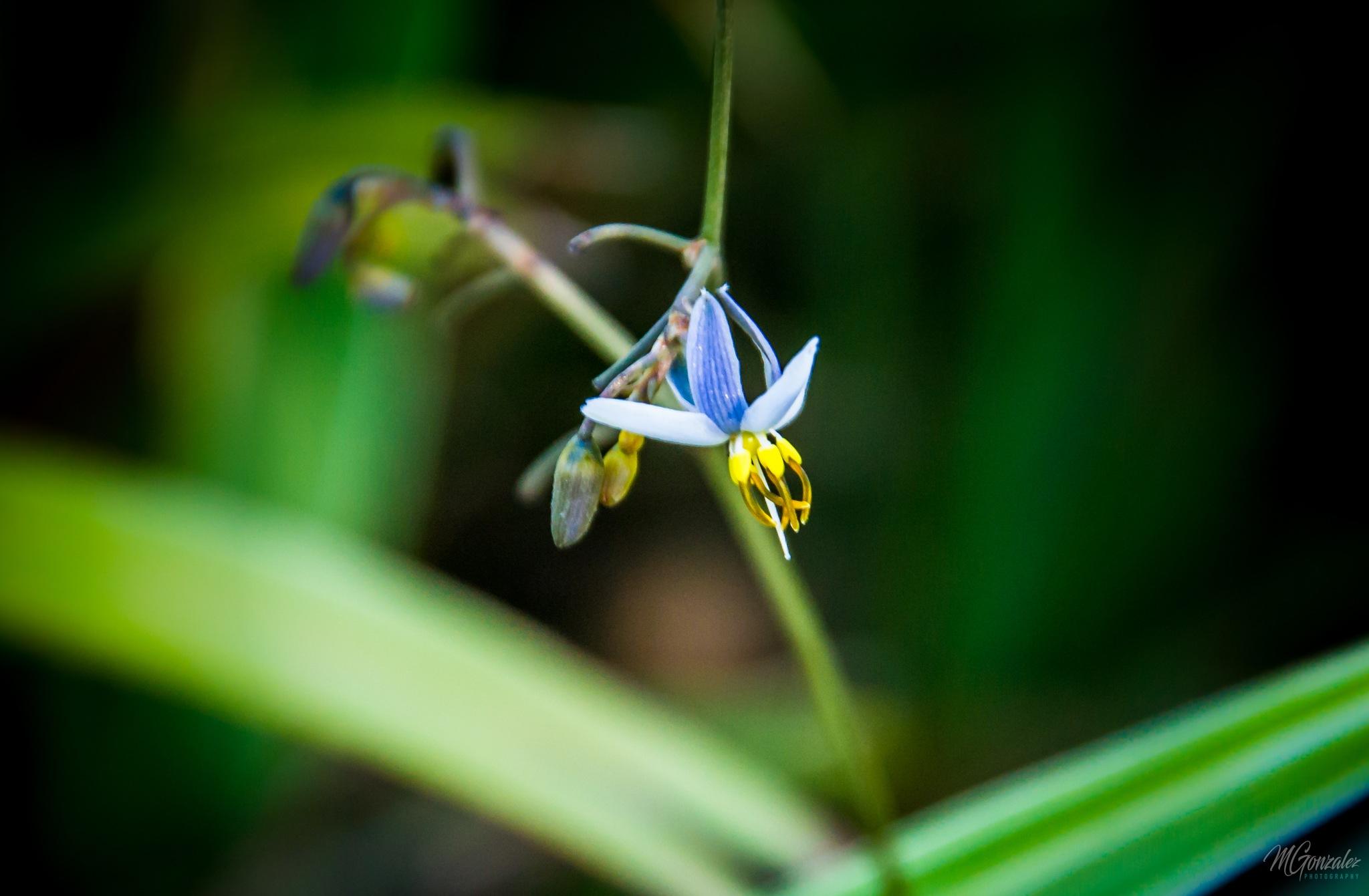 A tiny  flower..!!!!! by Martin G. Olivera
