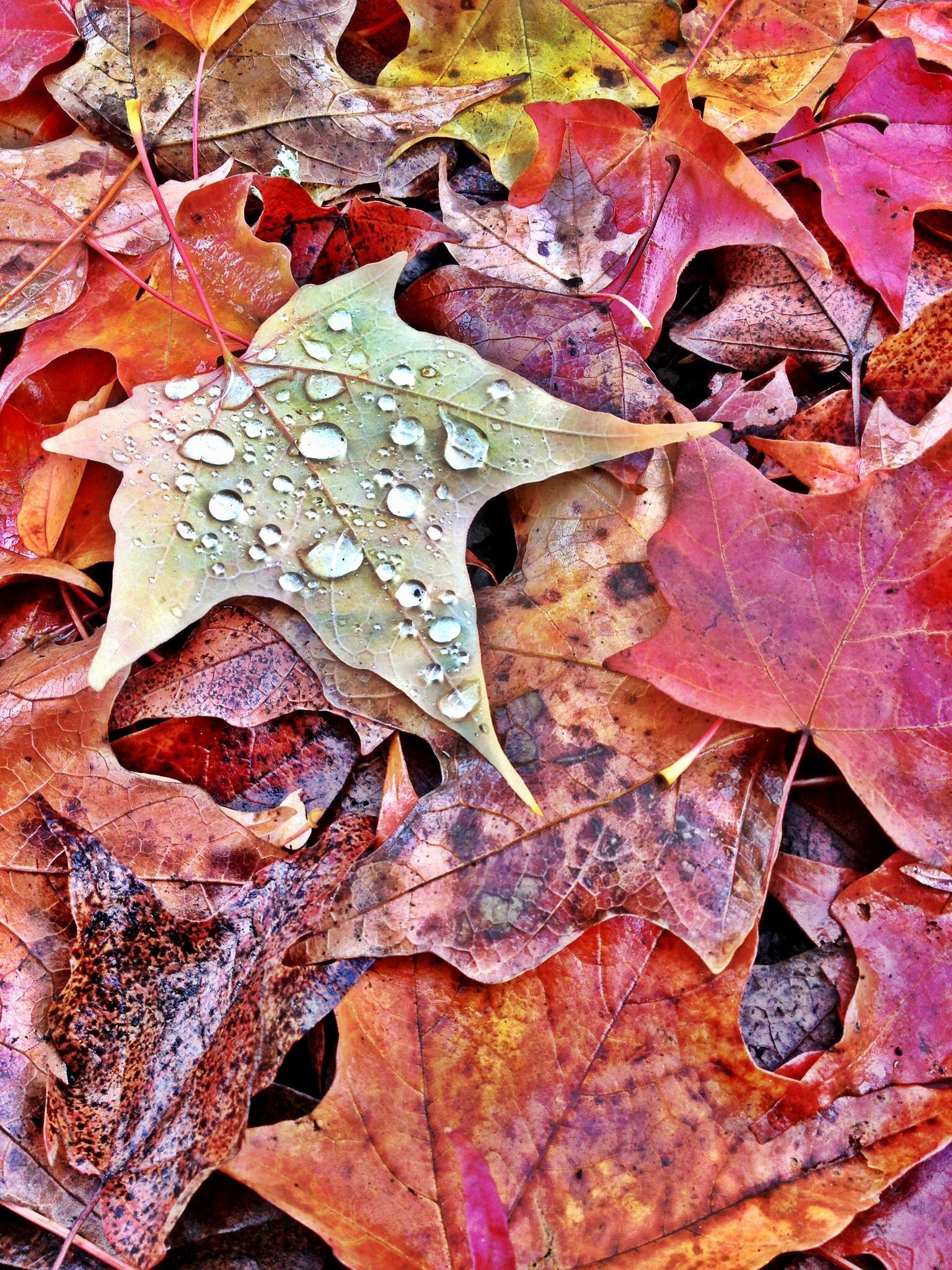 Resting Color by lyle.feilmeier
