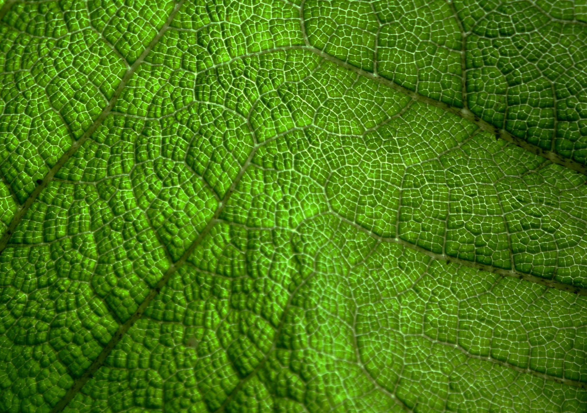 Leaf by Hannah Le Bail