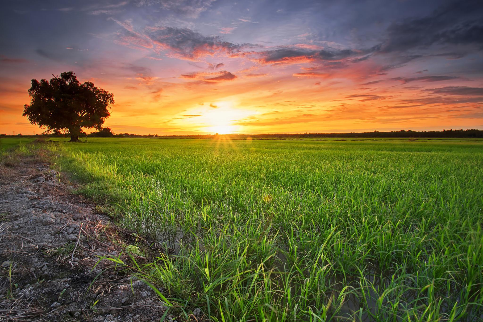 Paddy at sunset by fiz_zero