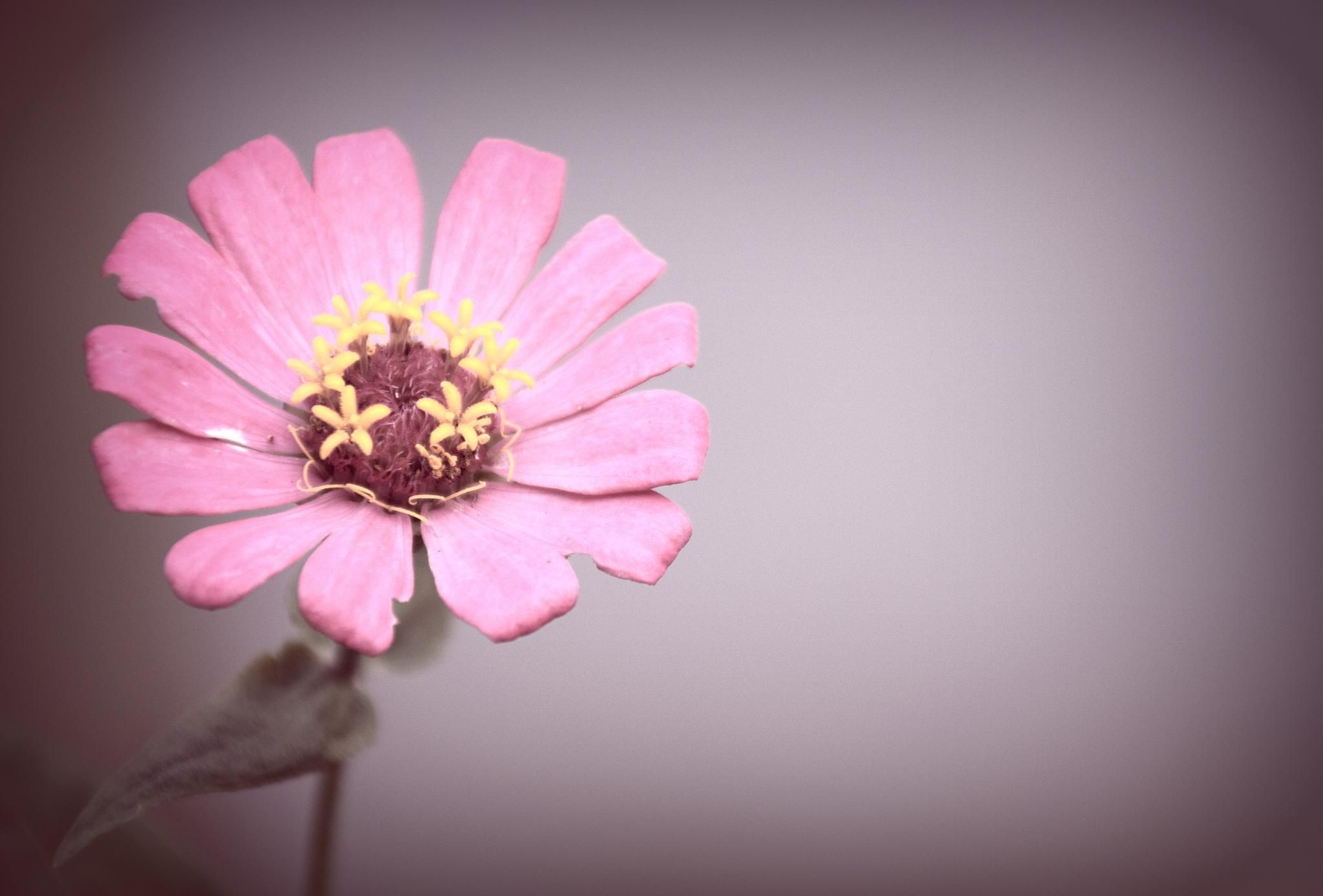 A Flower by aronrielle