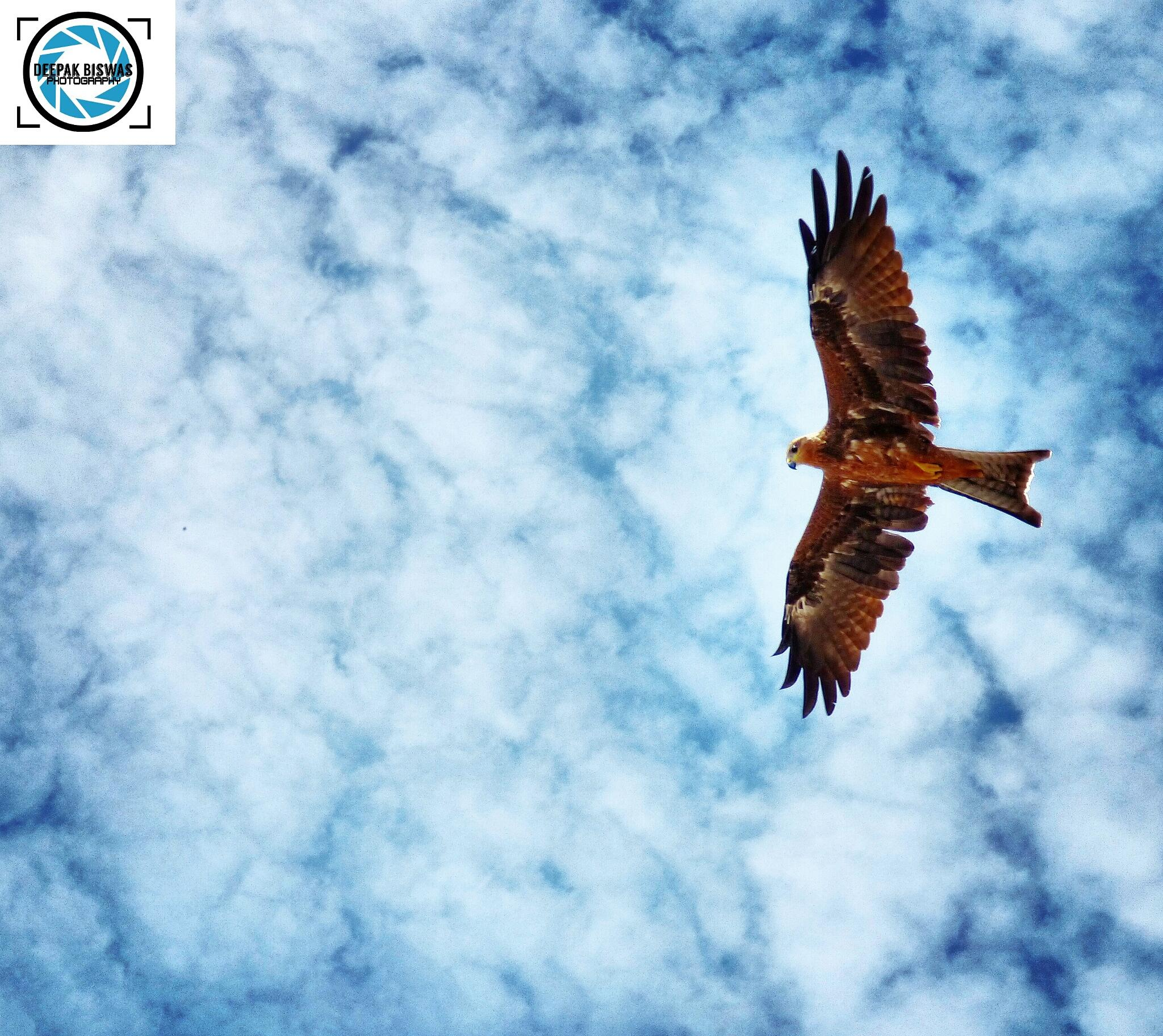 Eagle Frames by deepakbiswas26