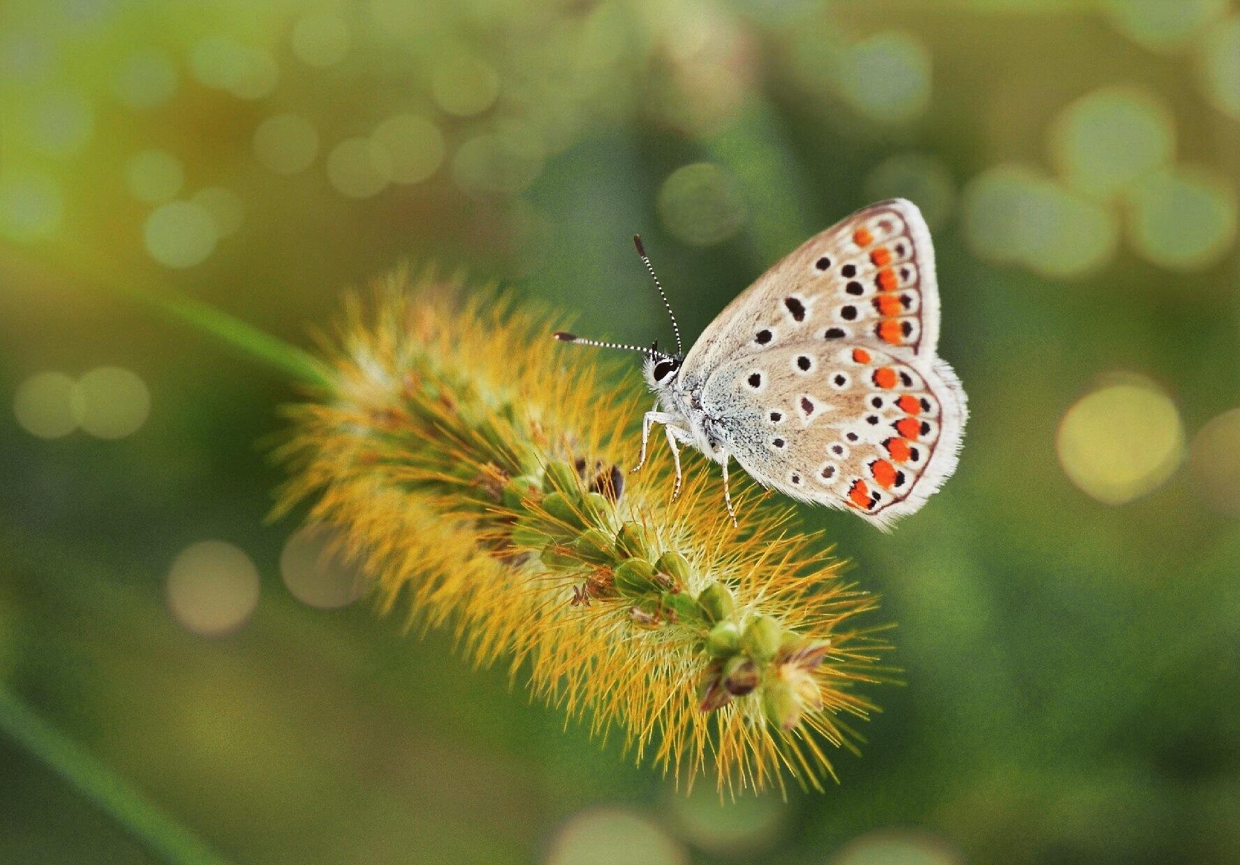 Butterfly Effect.? by omerfarukdomac