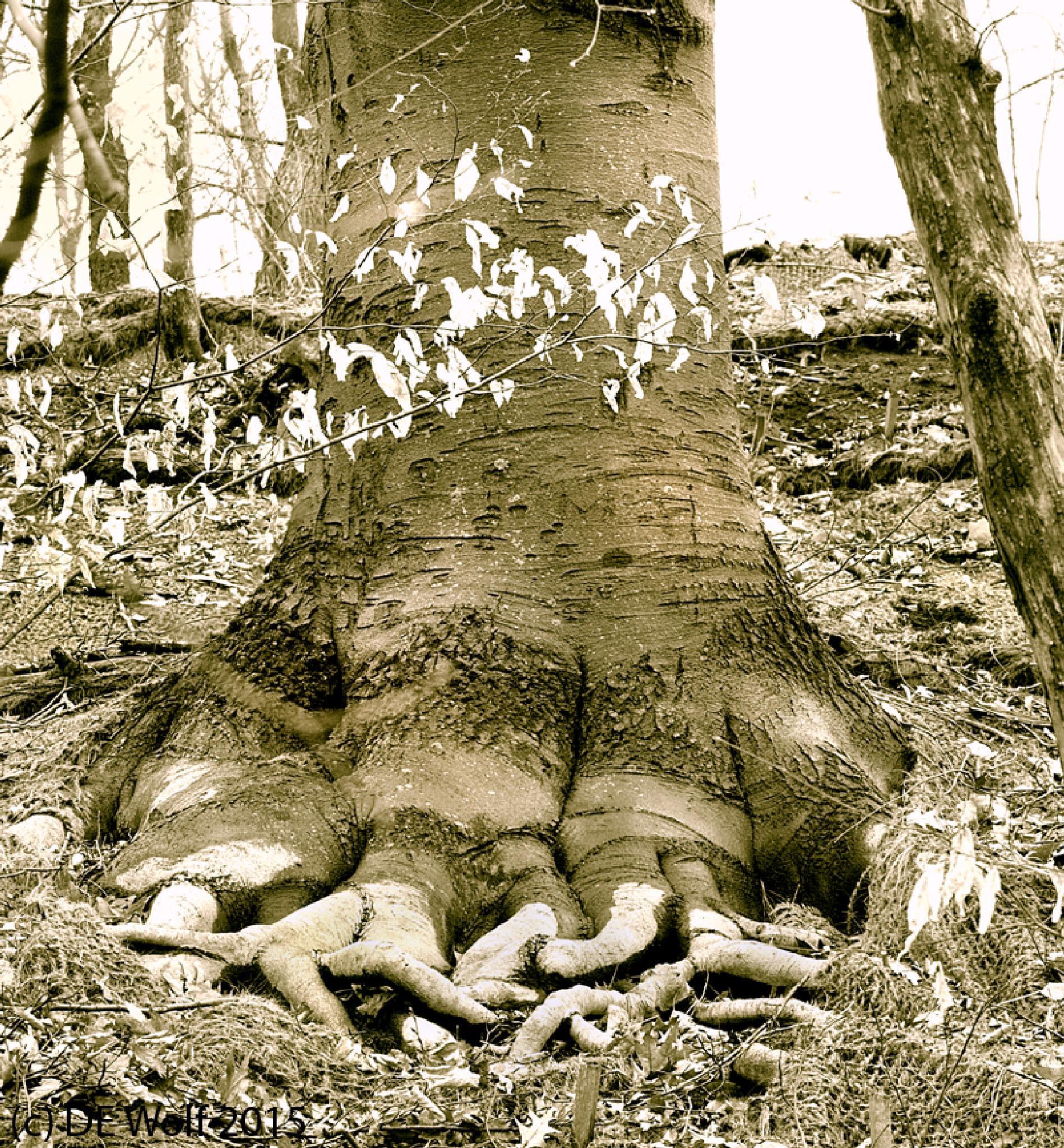 Merlin's Tree by David E. Wolf