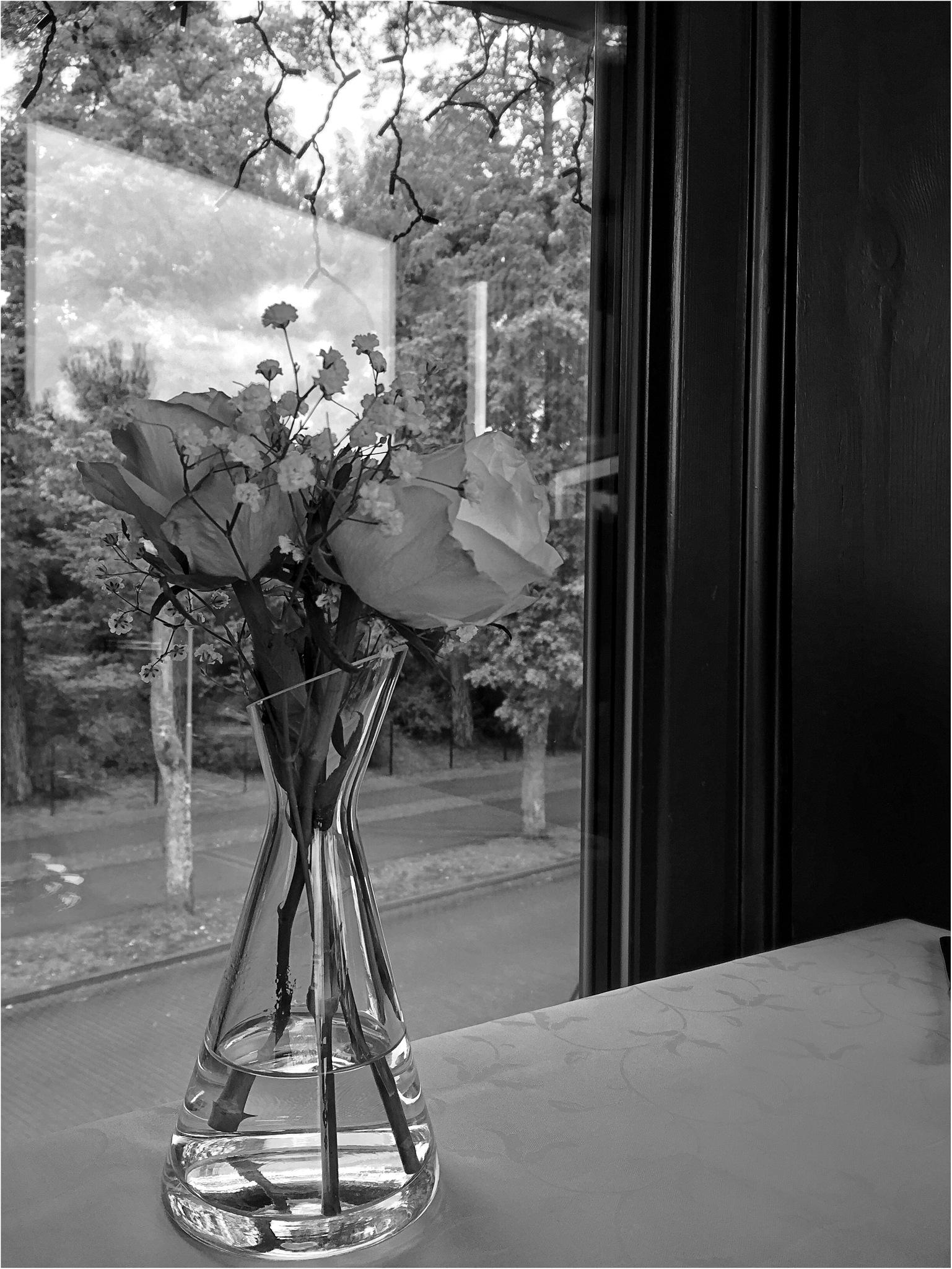Roses by Ada Tsodikov Photography