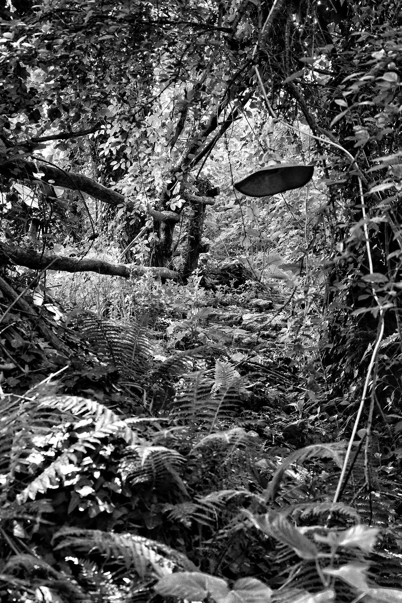 ~Nature in Black & White by aphrodite_ioannou