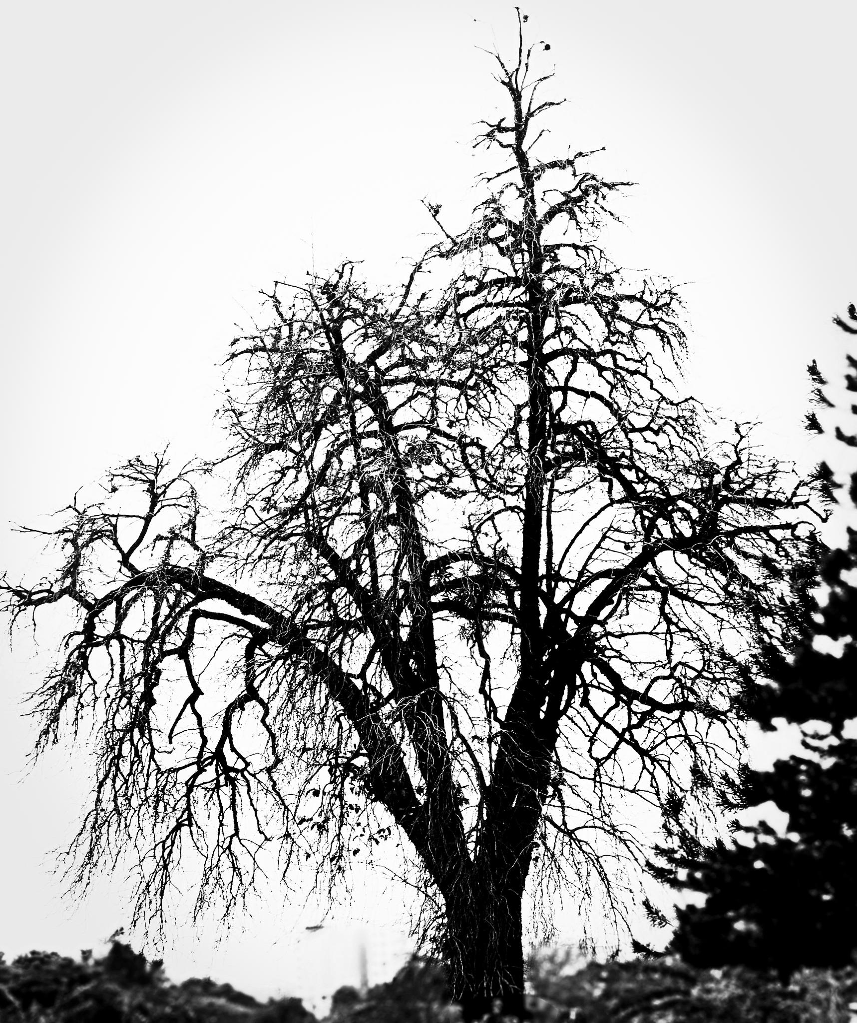 Standing old by Sourav Mitra