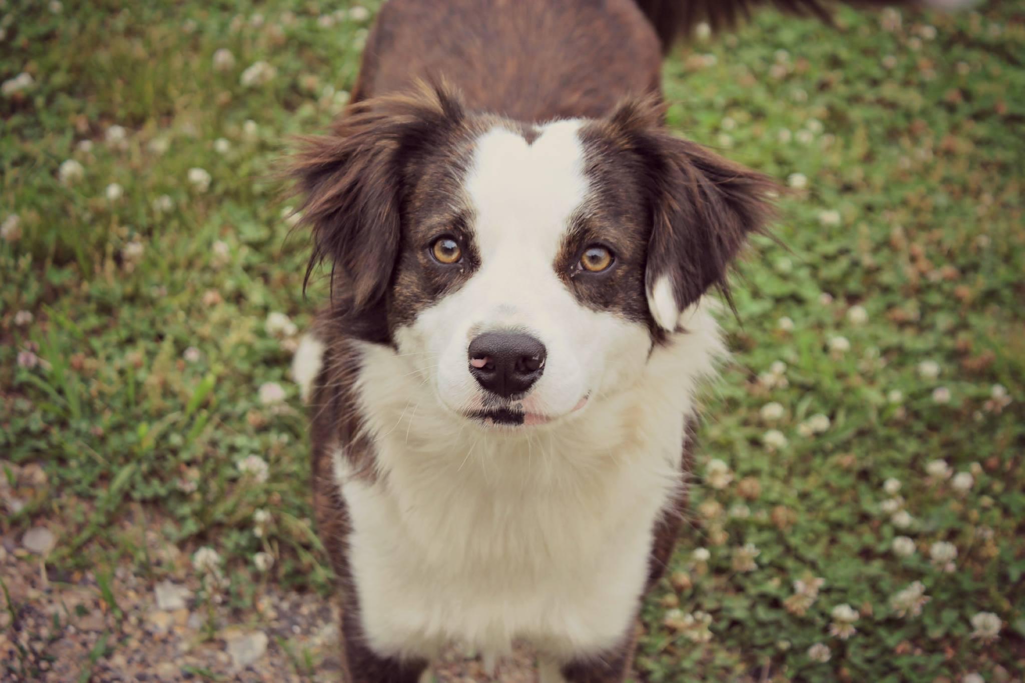 Farm Dog  by Jennifer