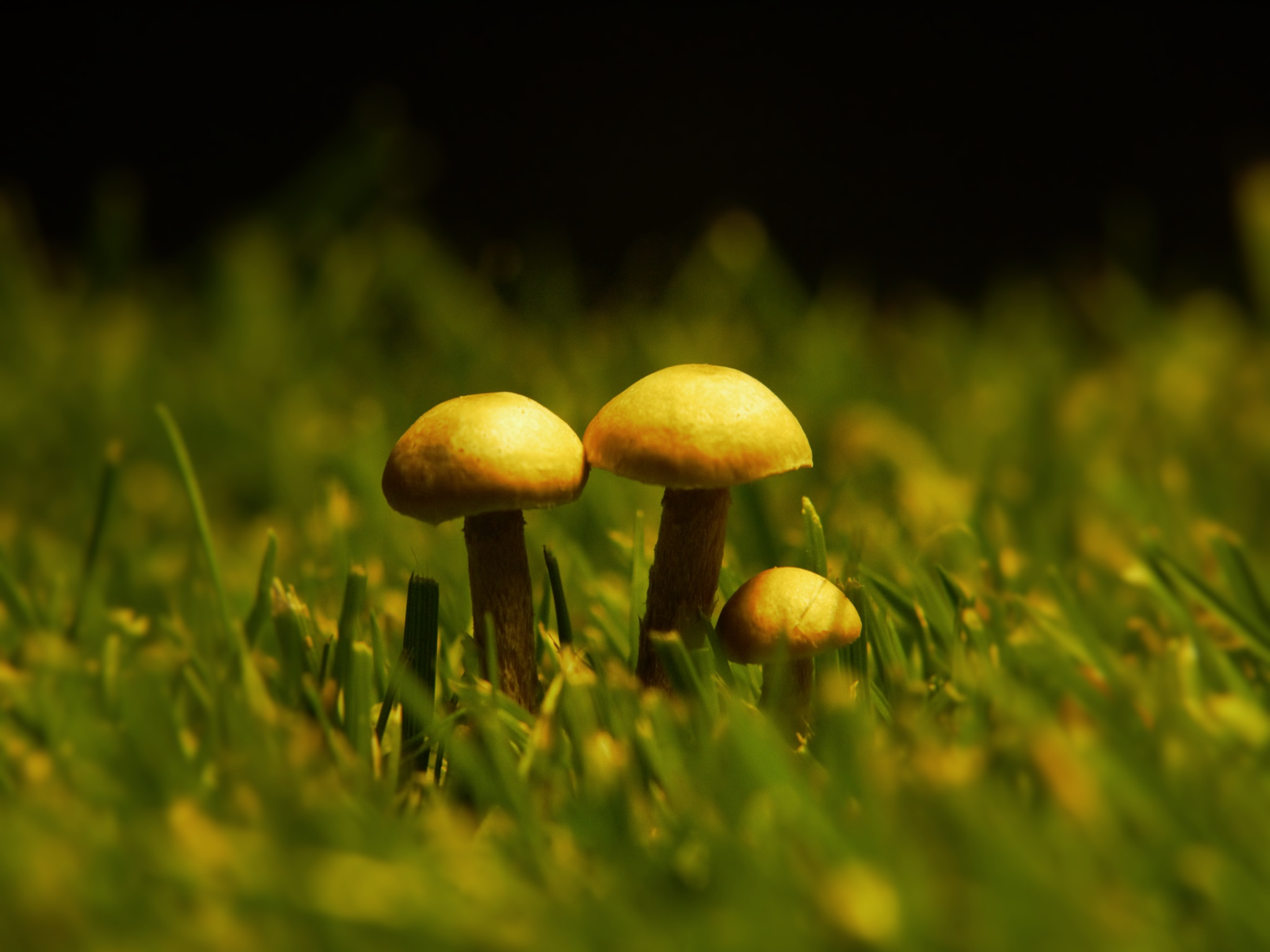 Three little Shrooms by Marco Kerp