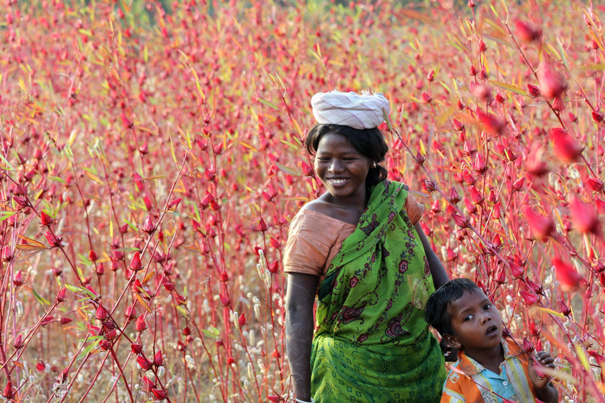 In The Field Of Flowers by Santosh Rajgarhia