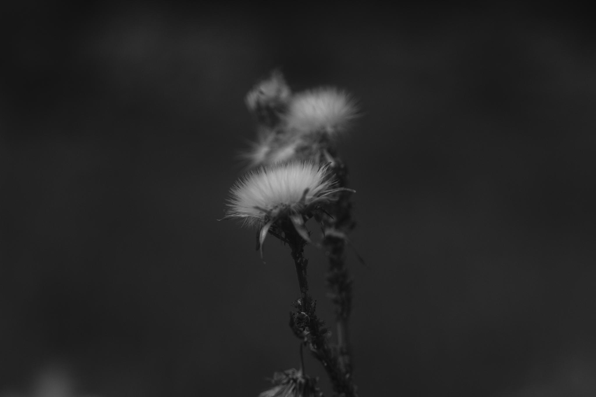Flor. by FratelliPizarro
