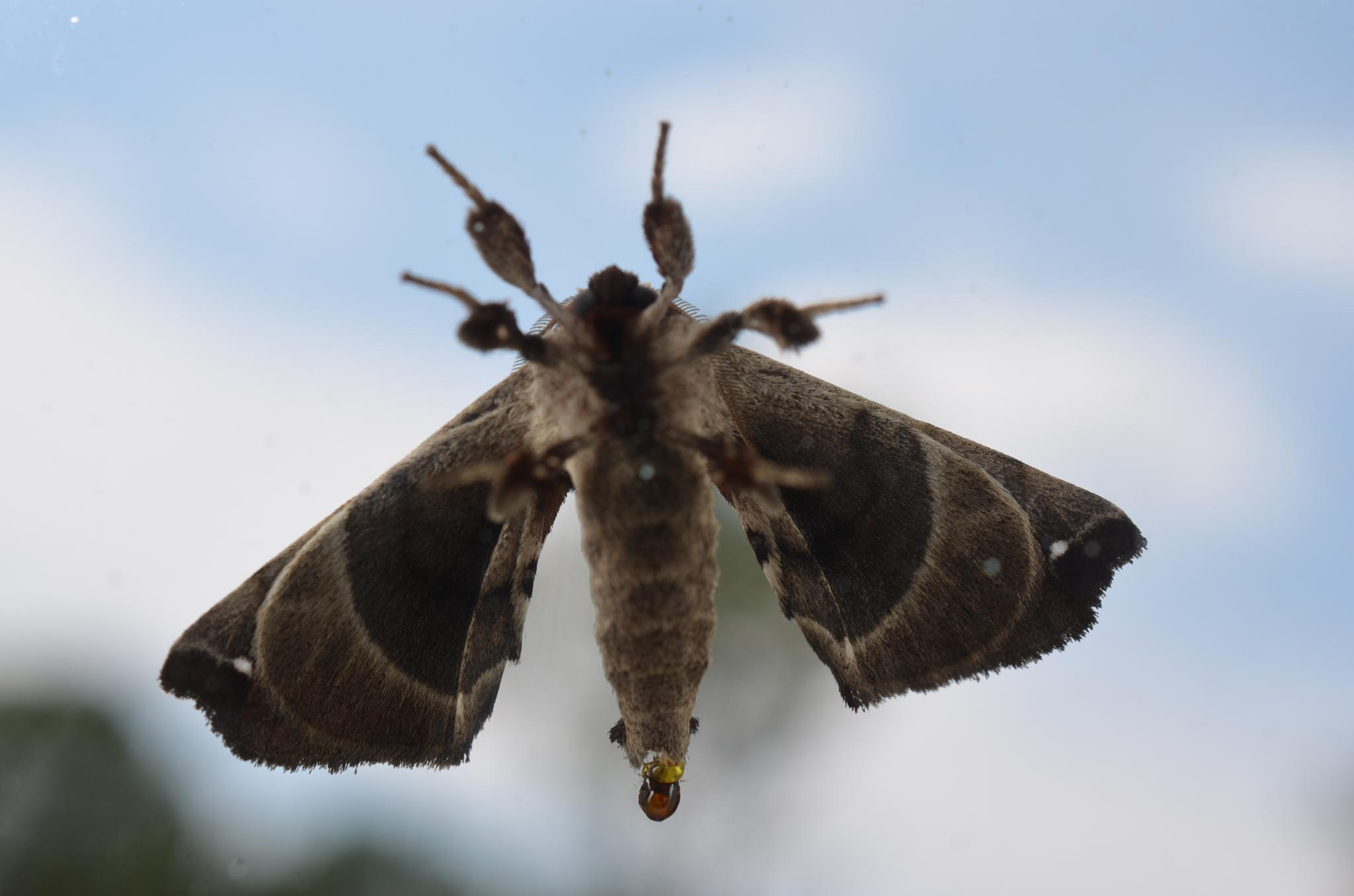 Moth on Glass by theberenguers