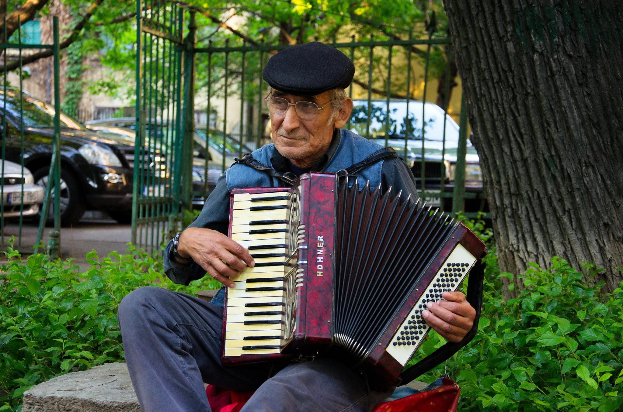 Accordion in the park! by alexandru nae